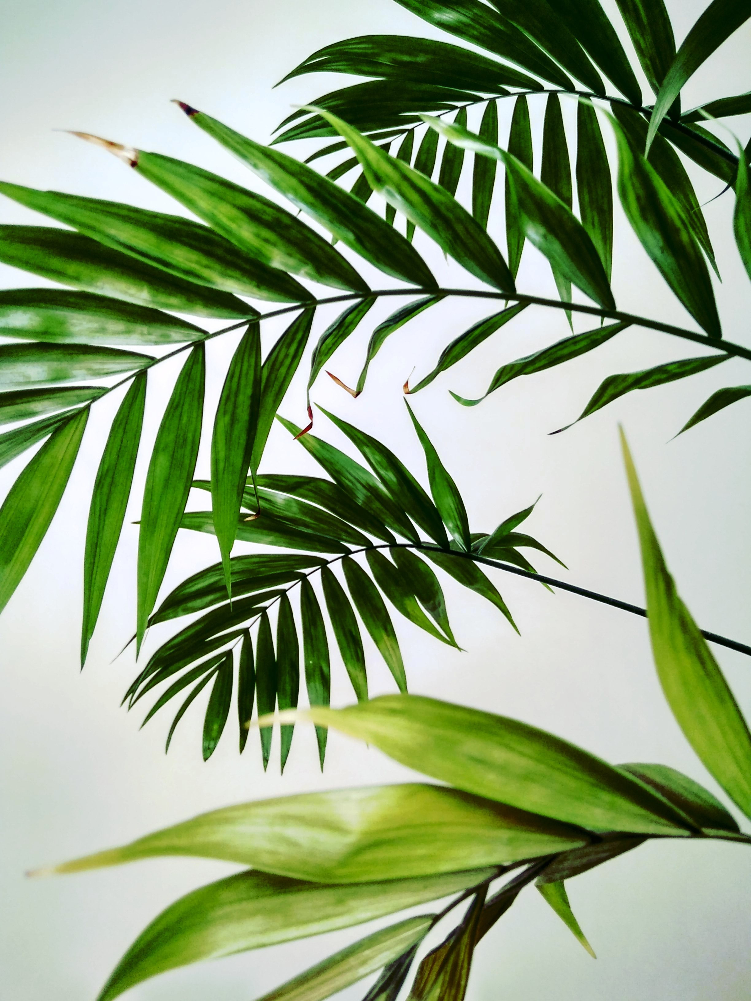 close-up photo of fan palm plant