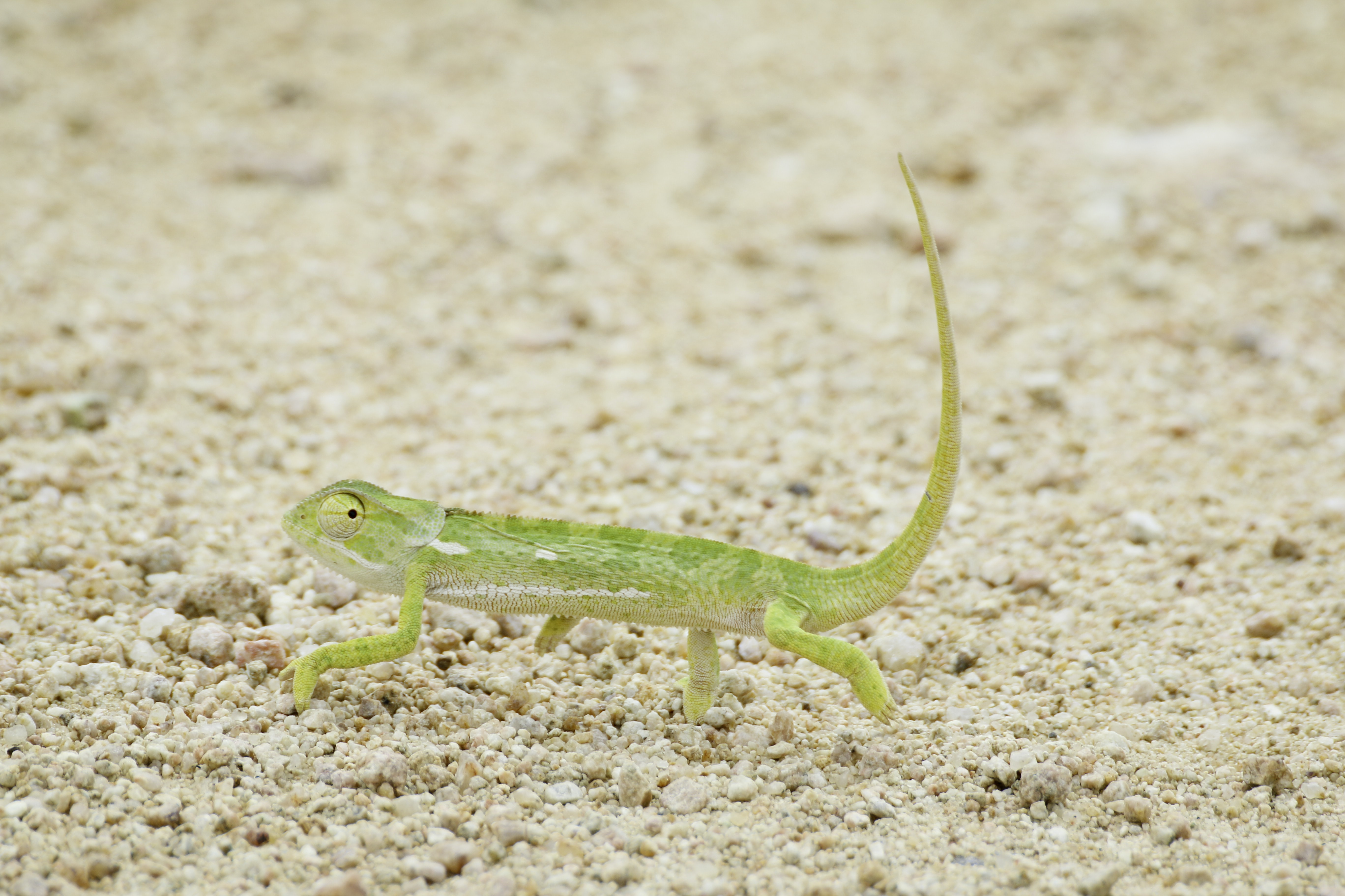 green reptile walking on soil