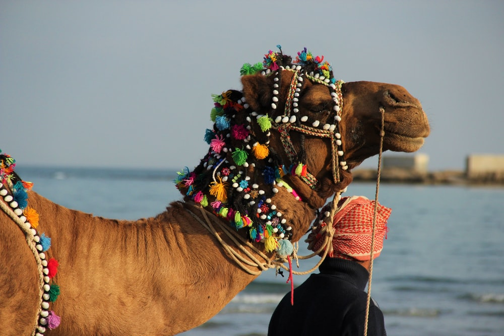 man standing near camel during daytime