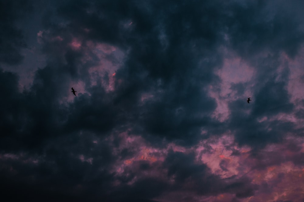 silhouette photo of two flying birds
