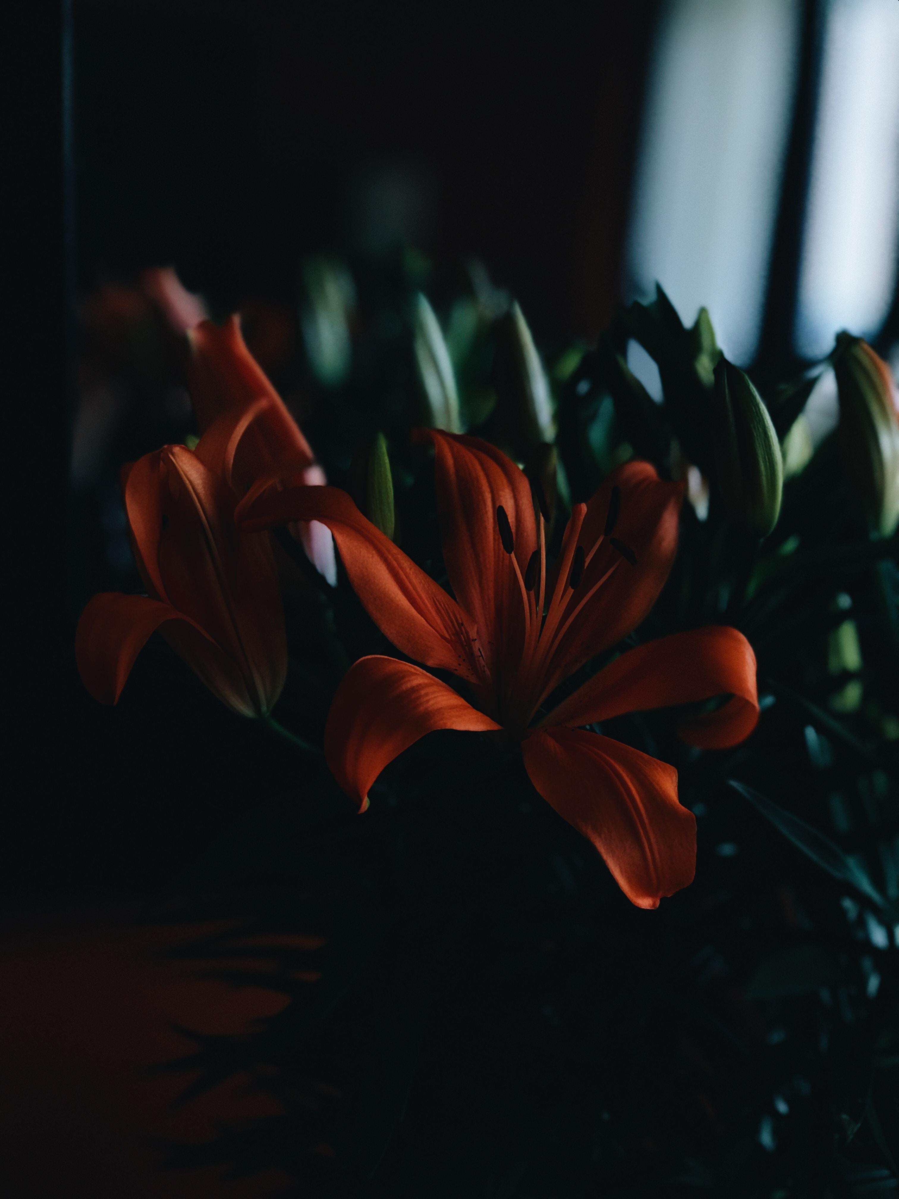tilt shift lens photography of red flower with green leaf
