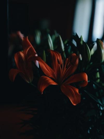 3970. Virágok