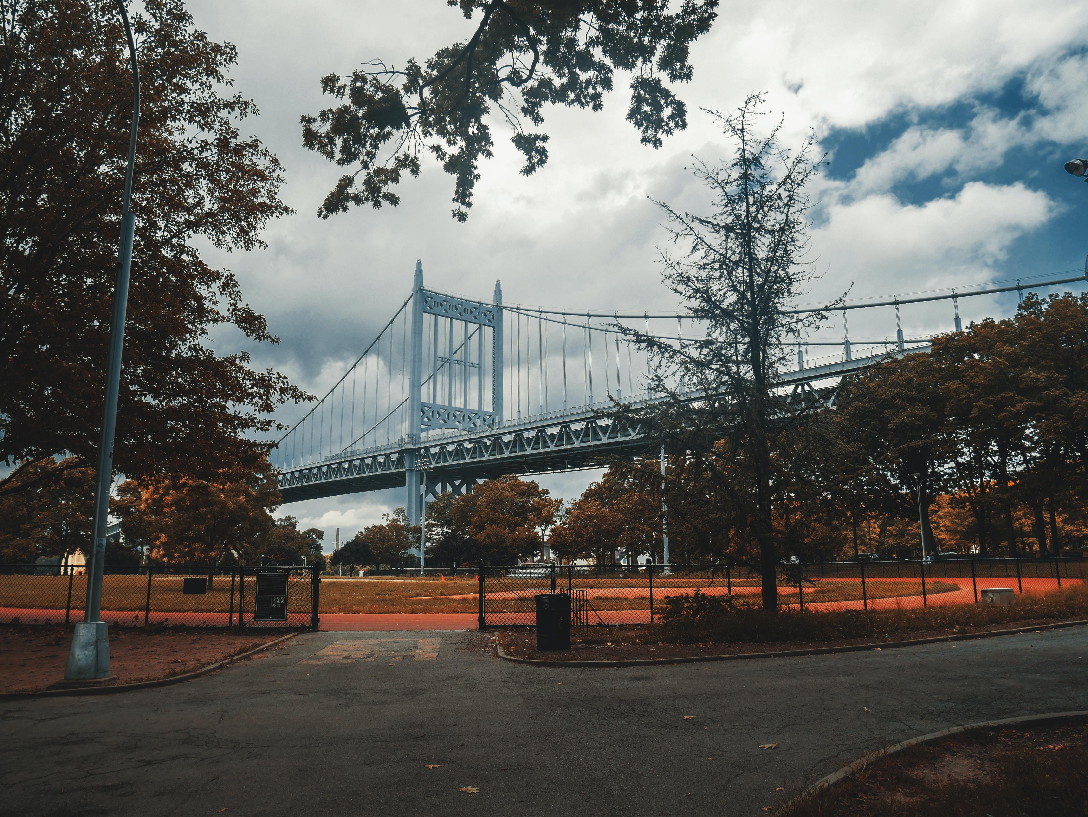 blue bridge beside tree