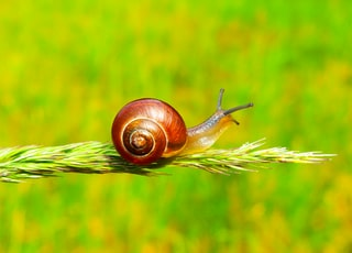 selective focus photography of snail on plant
