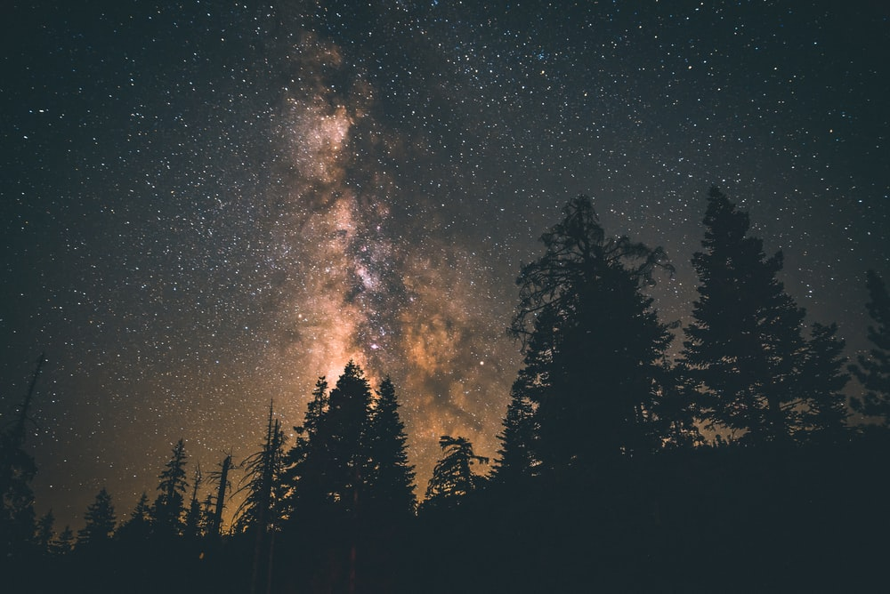 silhouette of trees under starry sky