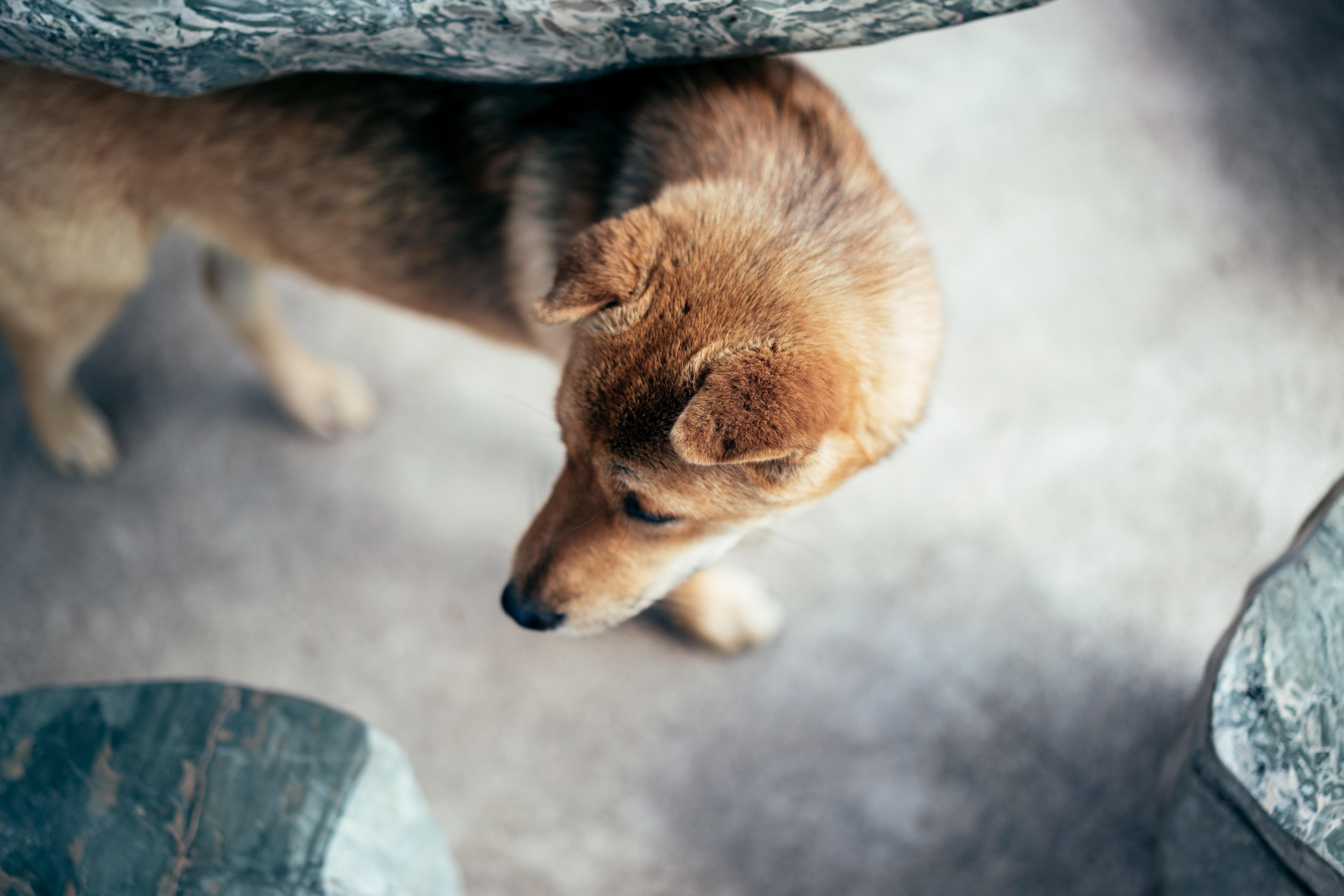 tan puppy on gray concrete flooring