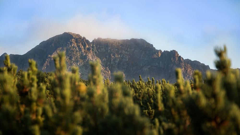 green leafed plant near mountain range under blue sky