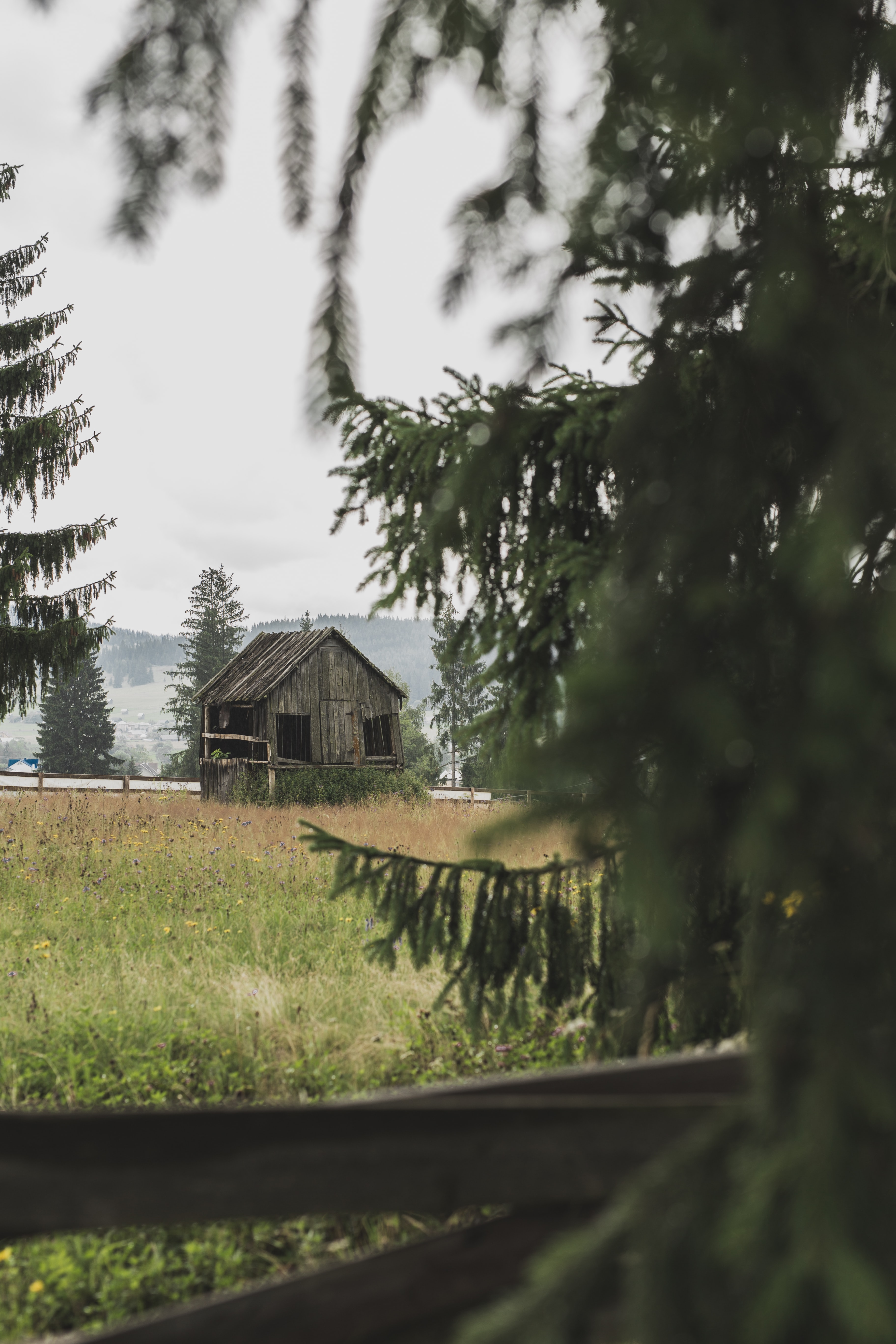 shallow focos photo of brown wooden house surrounded by trees