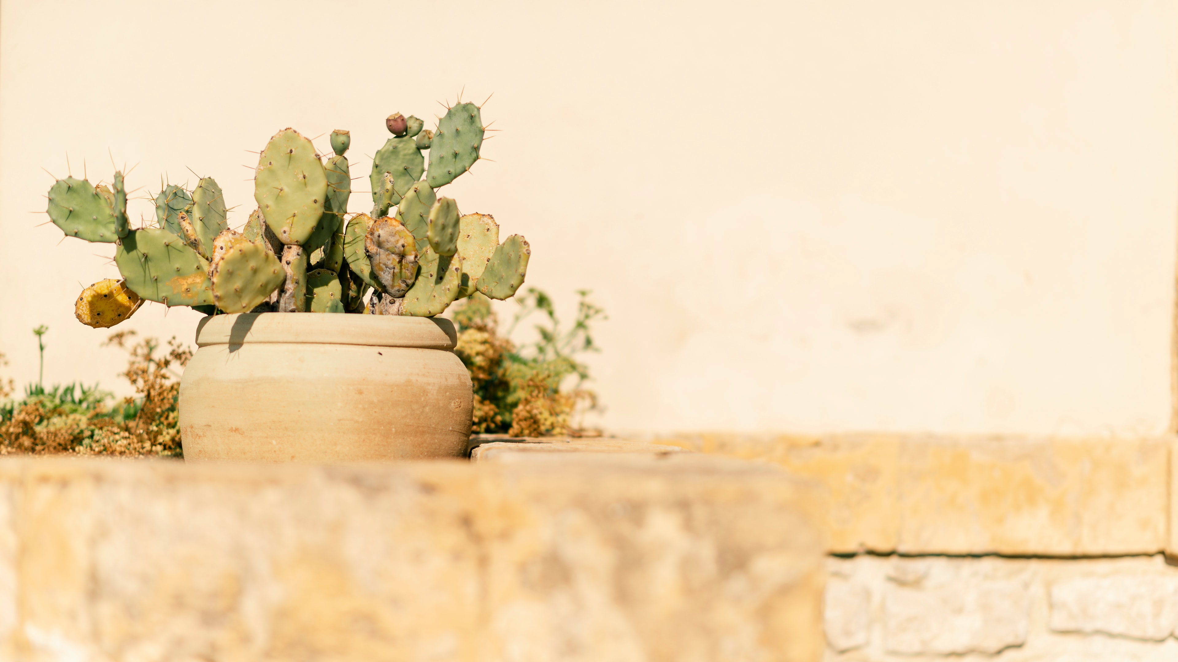 green cacti on brown ceramic pot