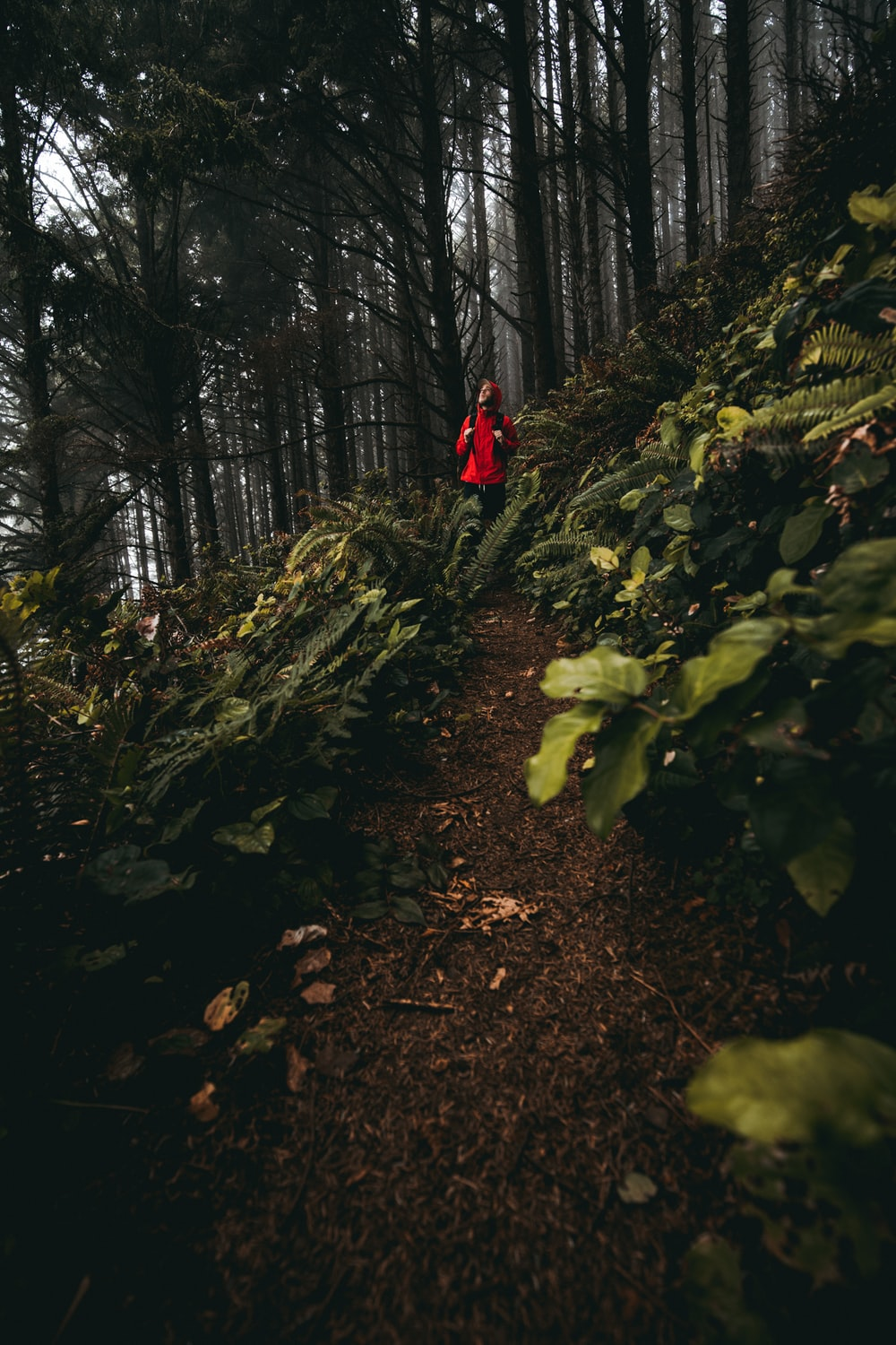 person in red jacket walking on pathway in the woods during daytime