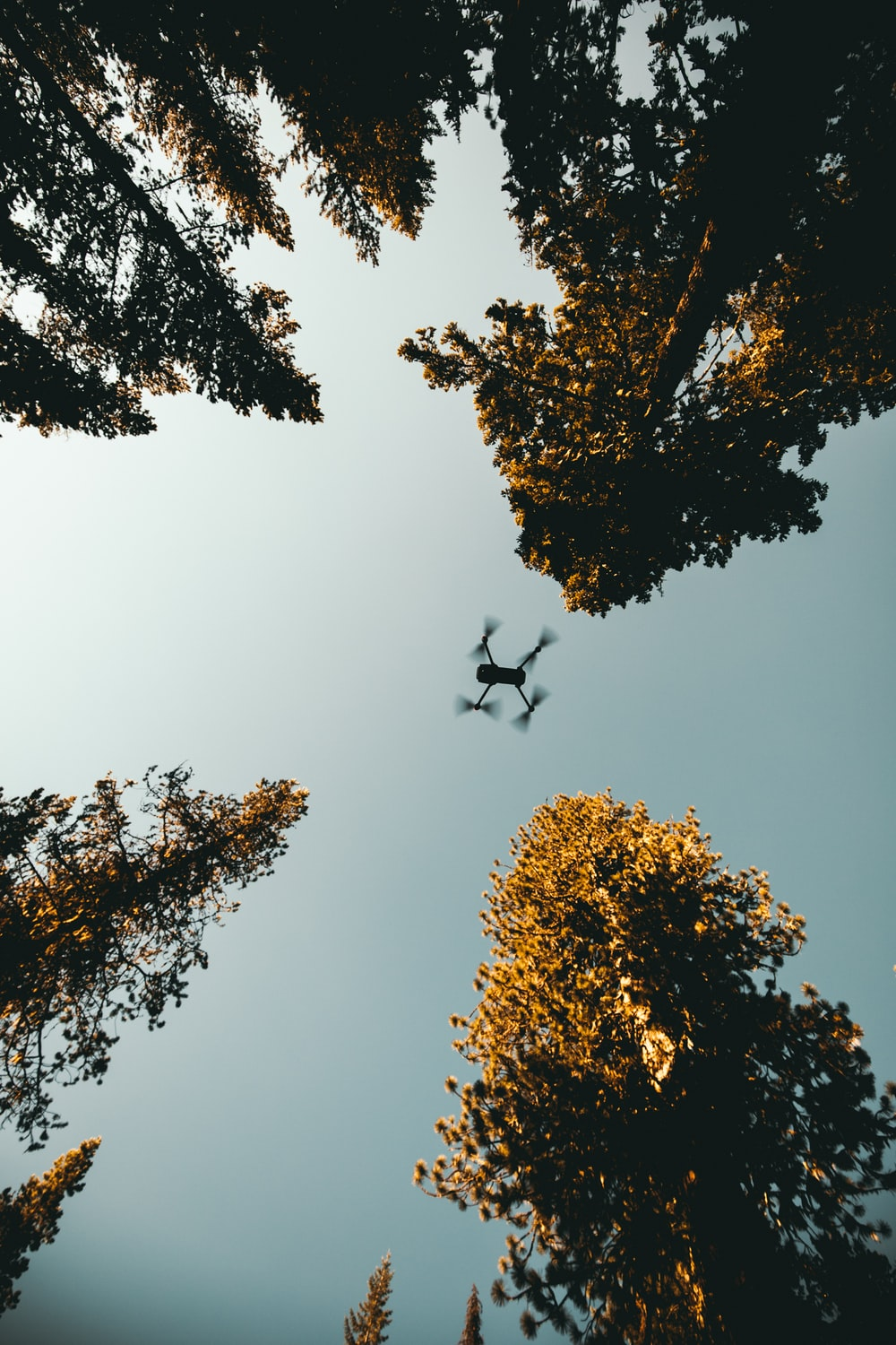 low angle photo of drone near trees