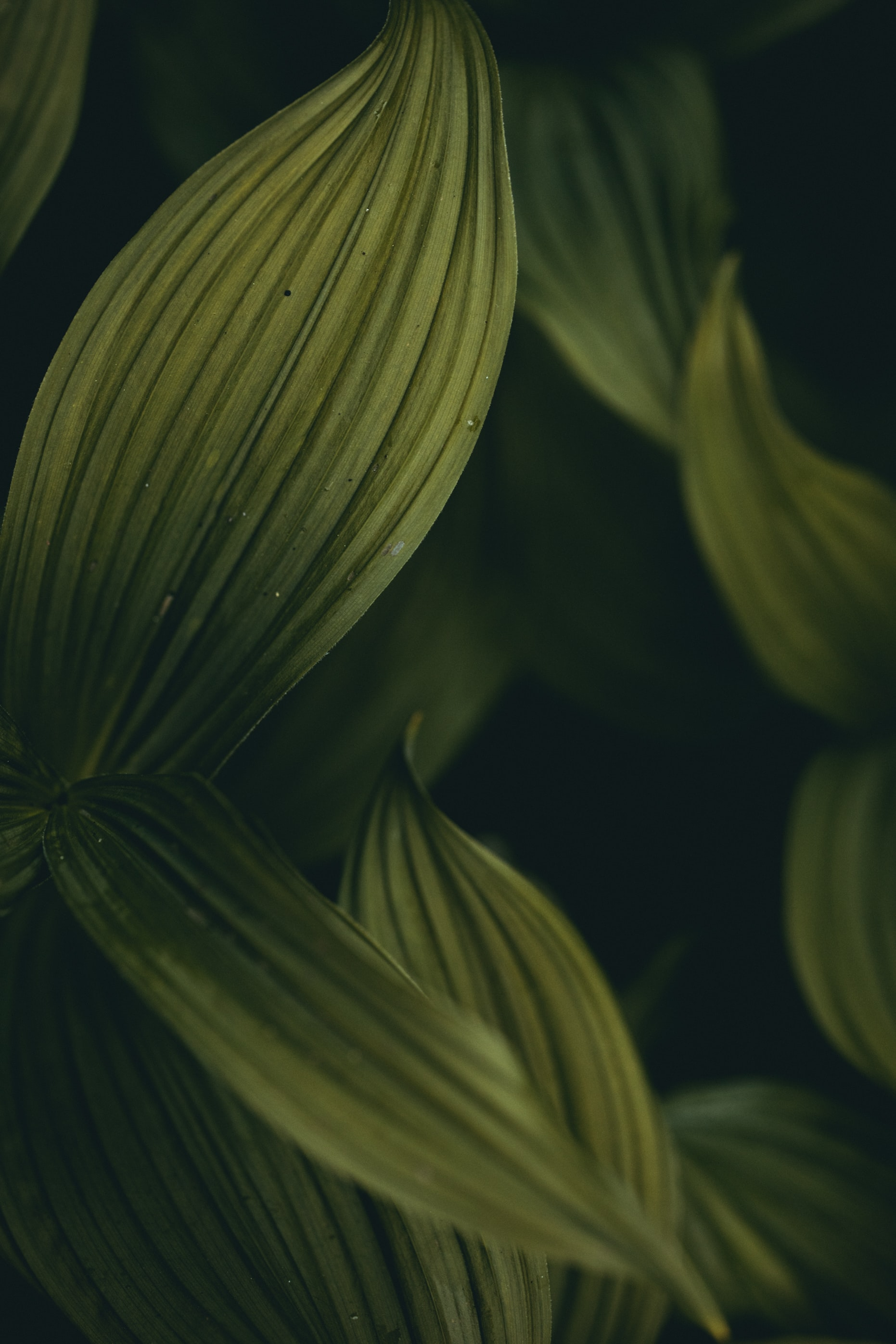 green leaves digital wallpaper