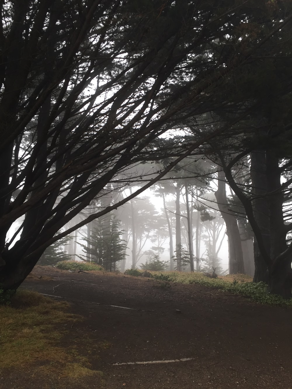 forest covered by fog during daytime