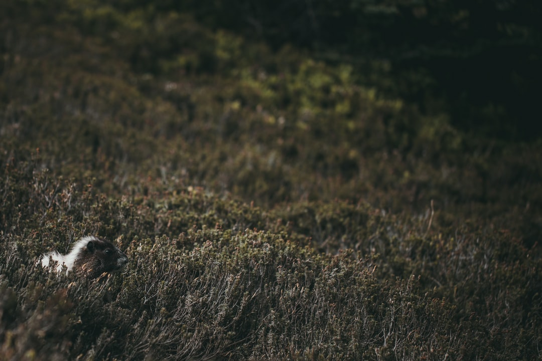 A cute little marmot.