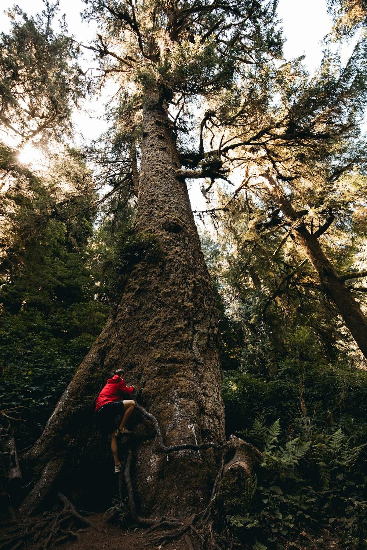 man climbing the tree
