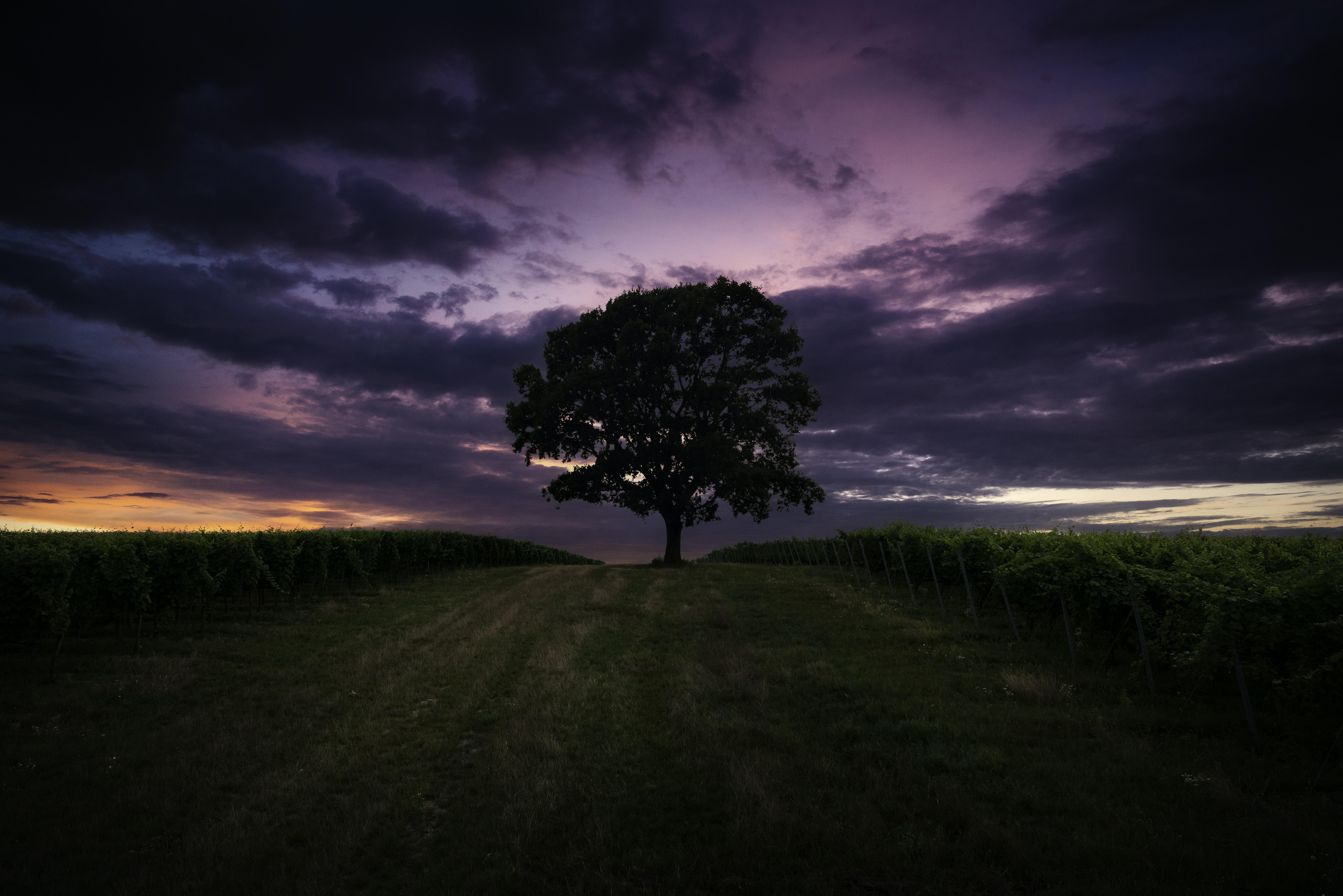 landscape photo of tree