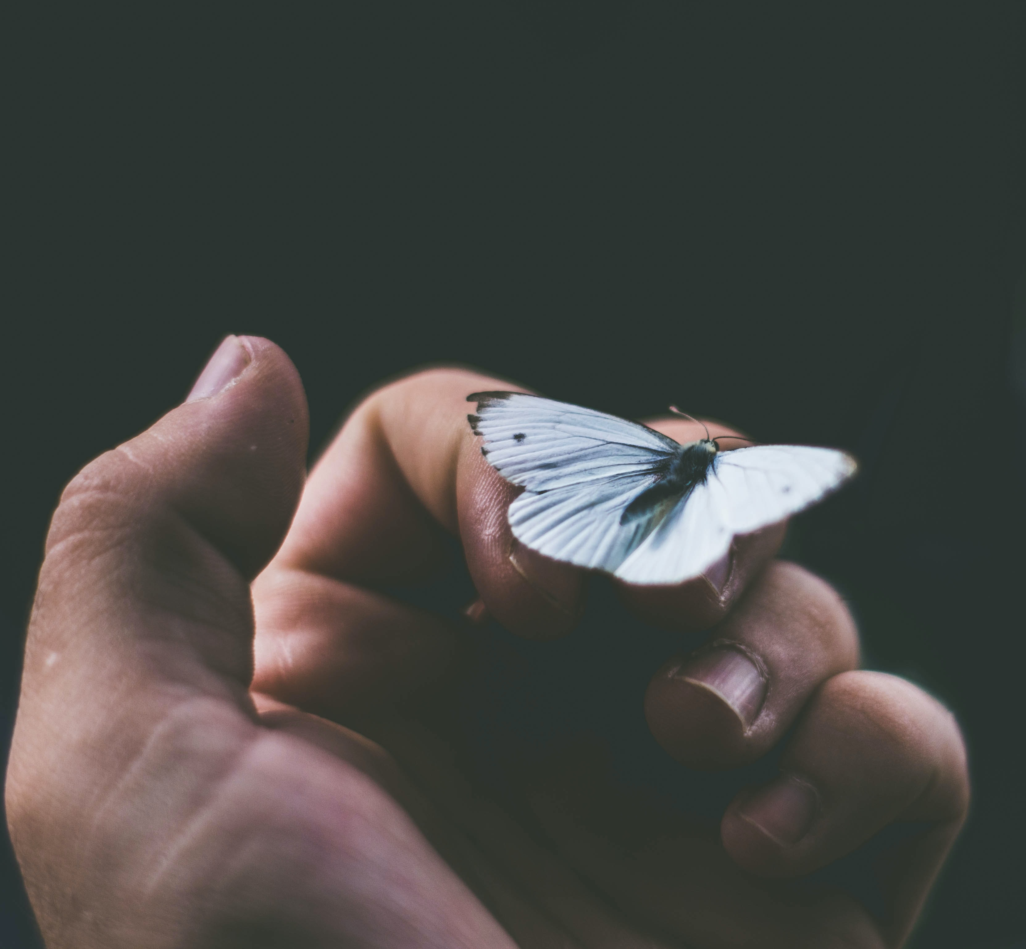 black and white butterfly on person's finger