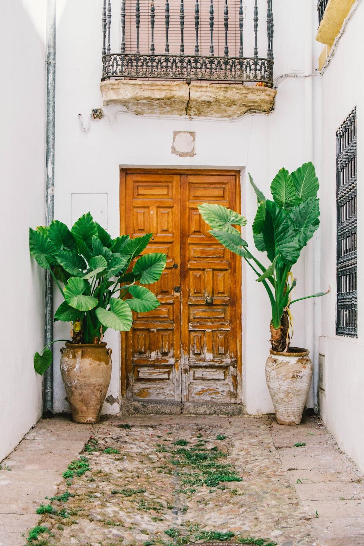 two green plants beside door