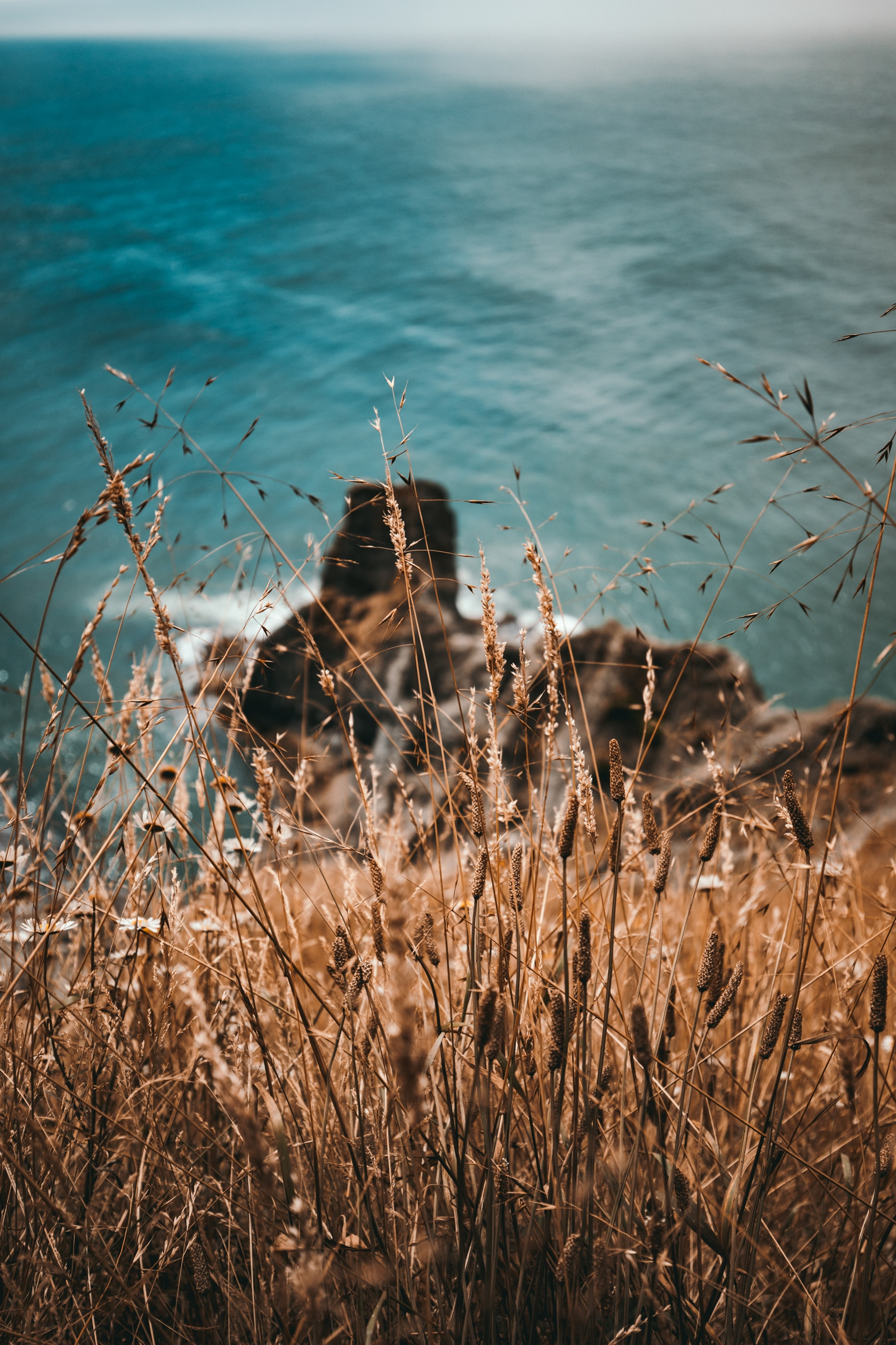 brown grass on cliff