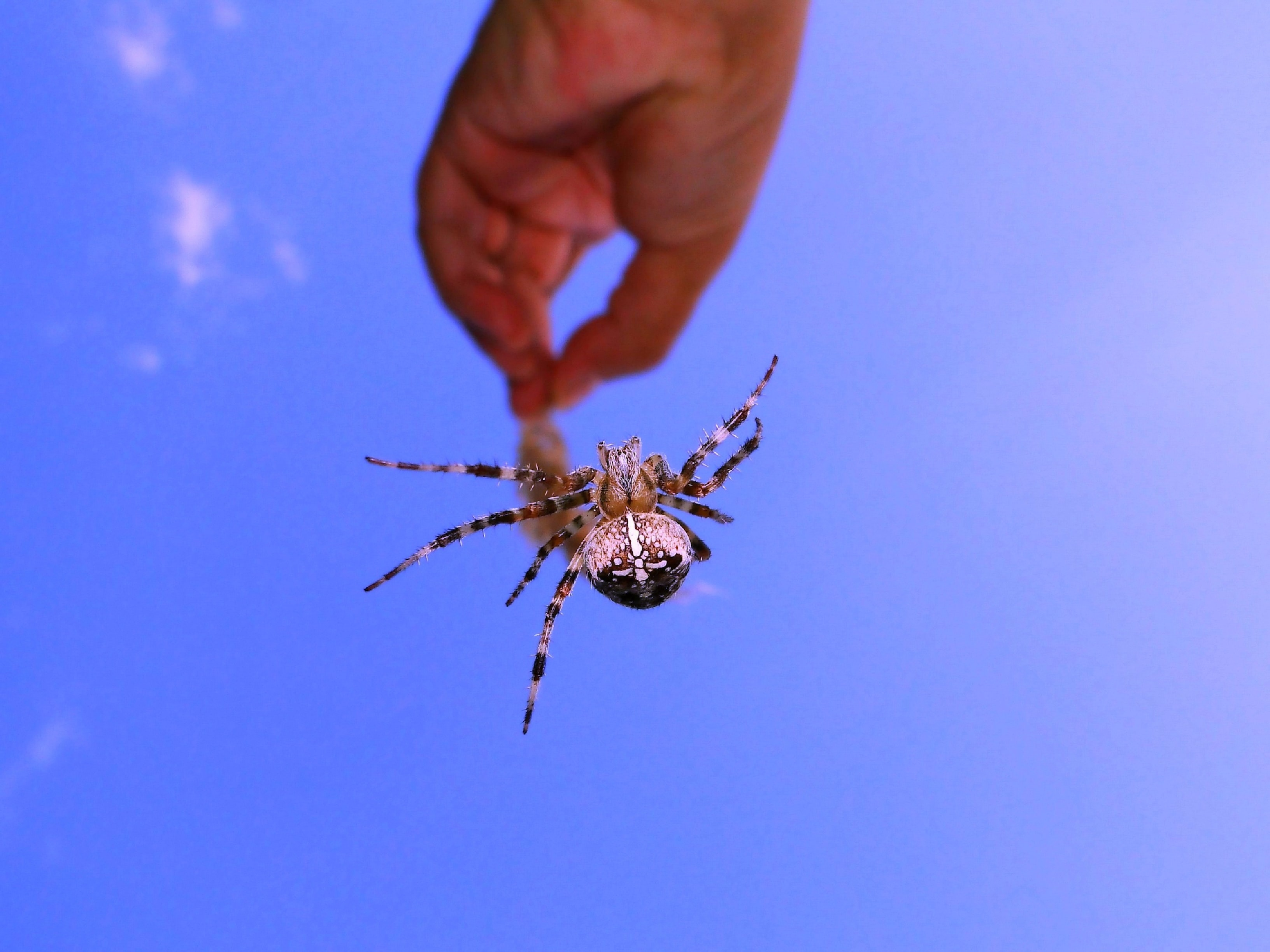 person holding brown and black spider at daytime