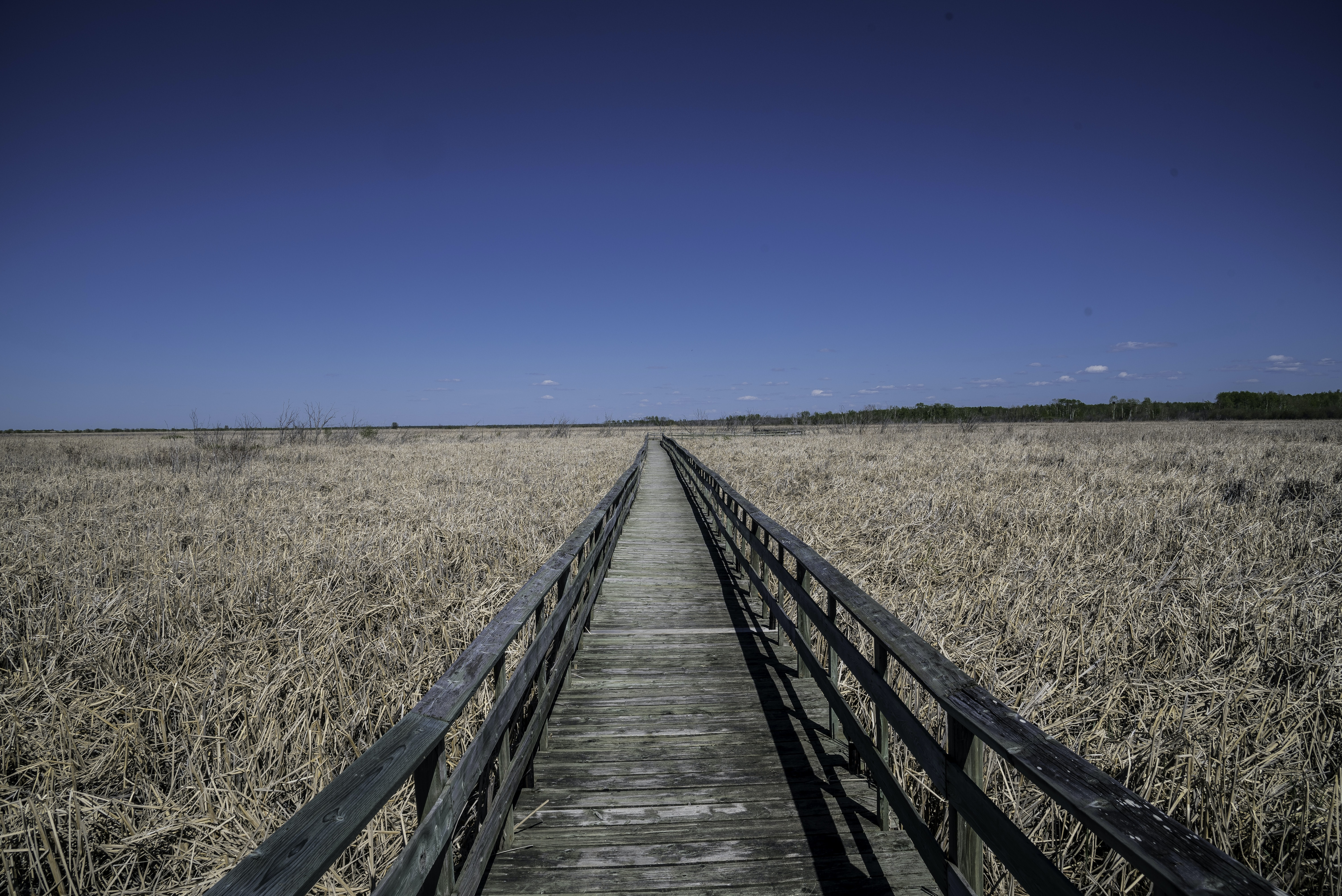 gray wooden pathway with rails between grass field