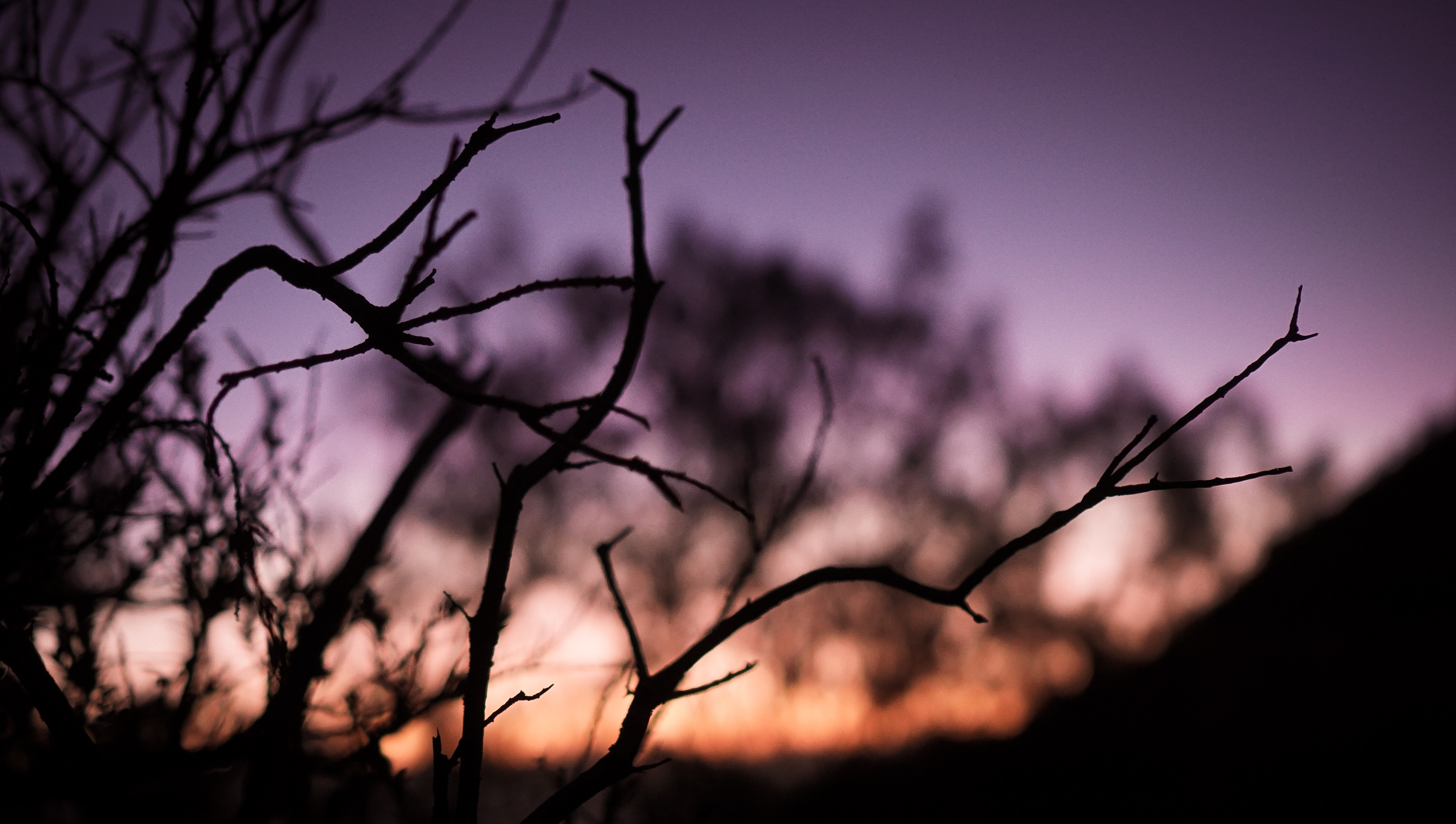 selective focus photography of bare branch