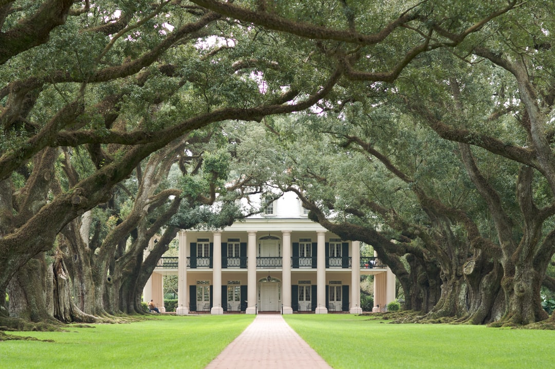 5 Tips to Care for a Live Oak Tree