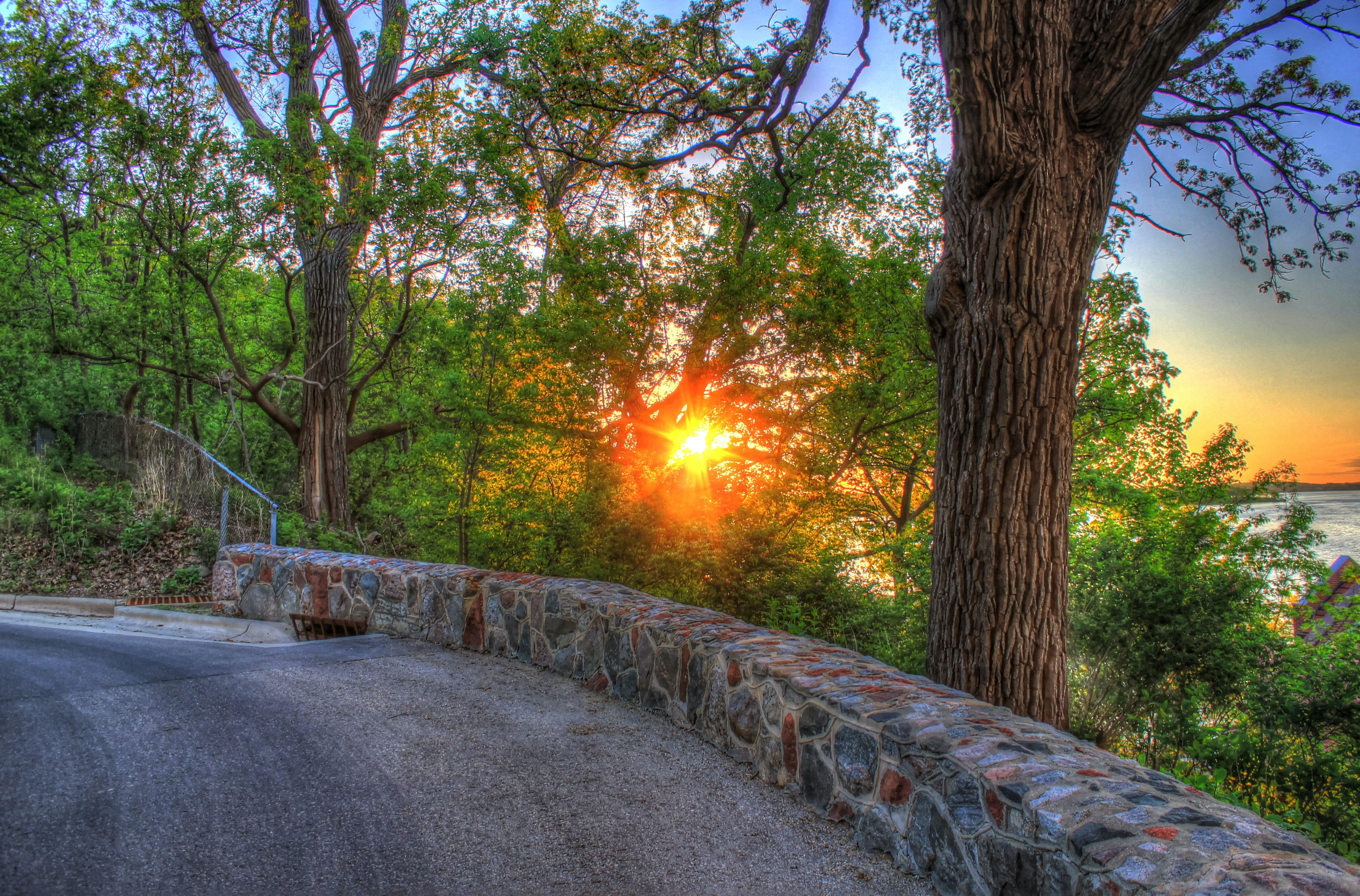 sunset view through green trees beside concrete road