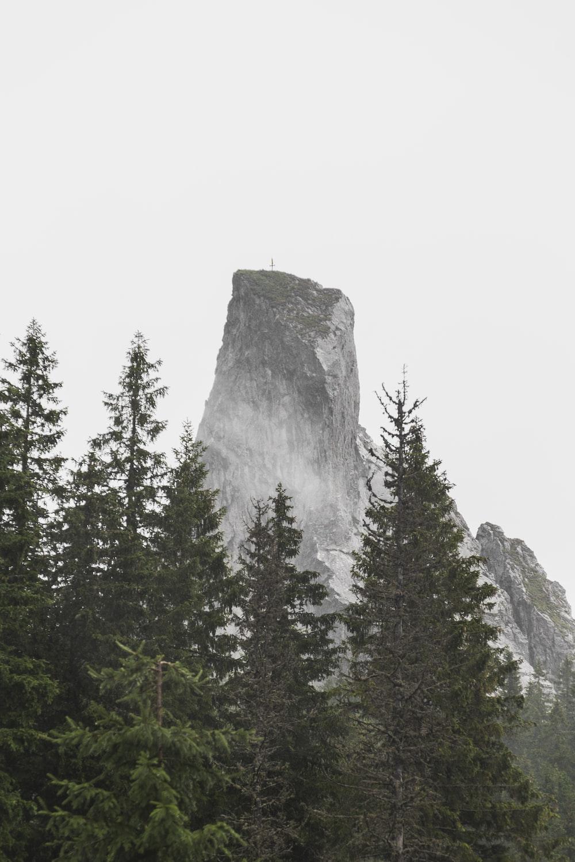mountain near pine trees