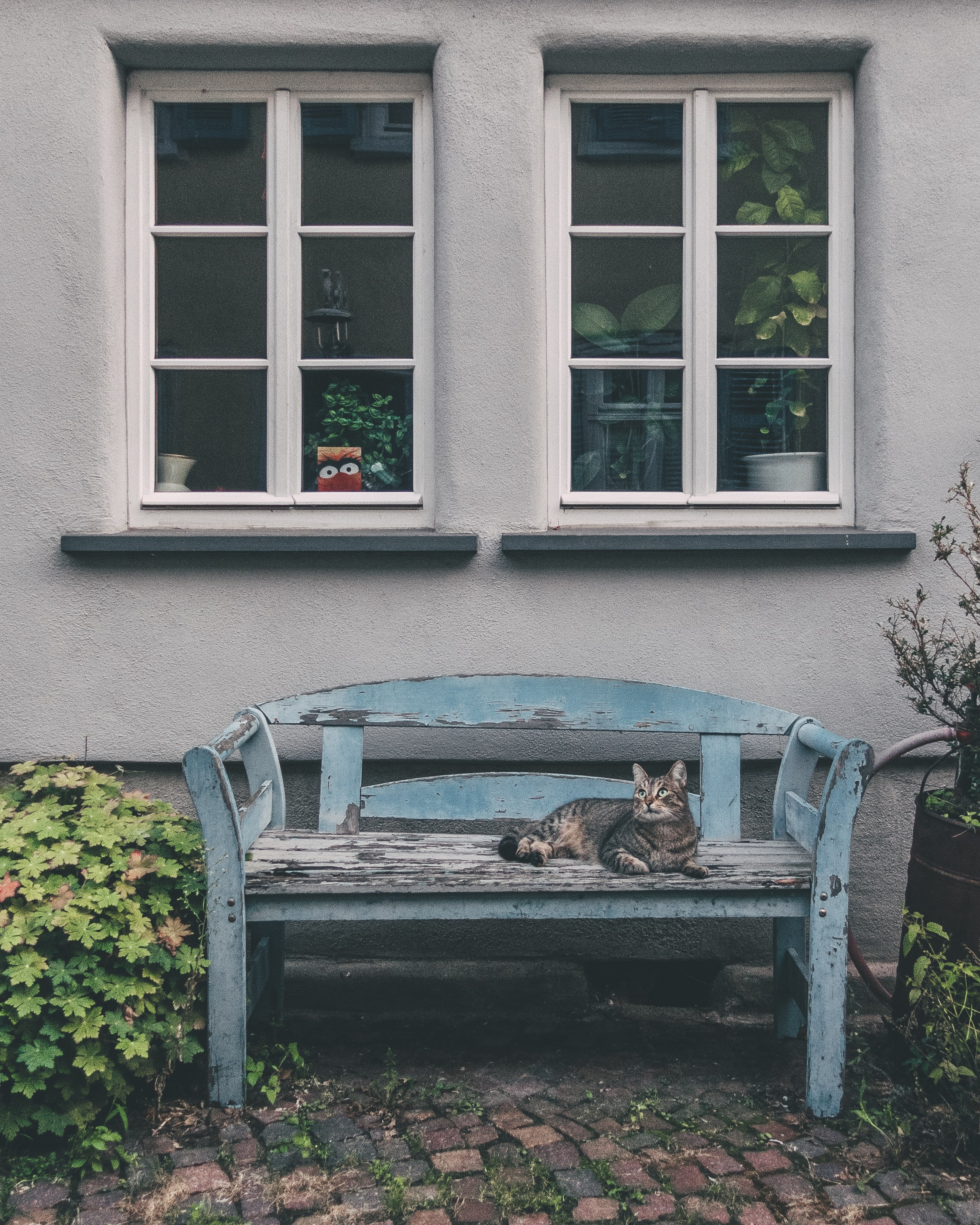gray tabby cat lying on blue wooden bench