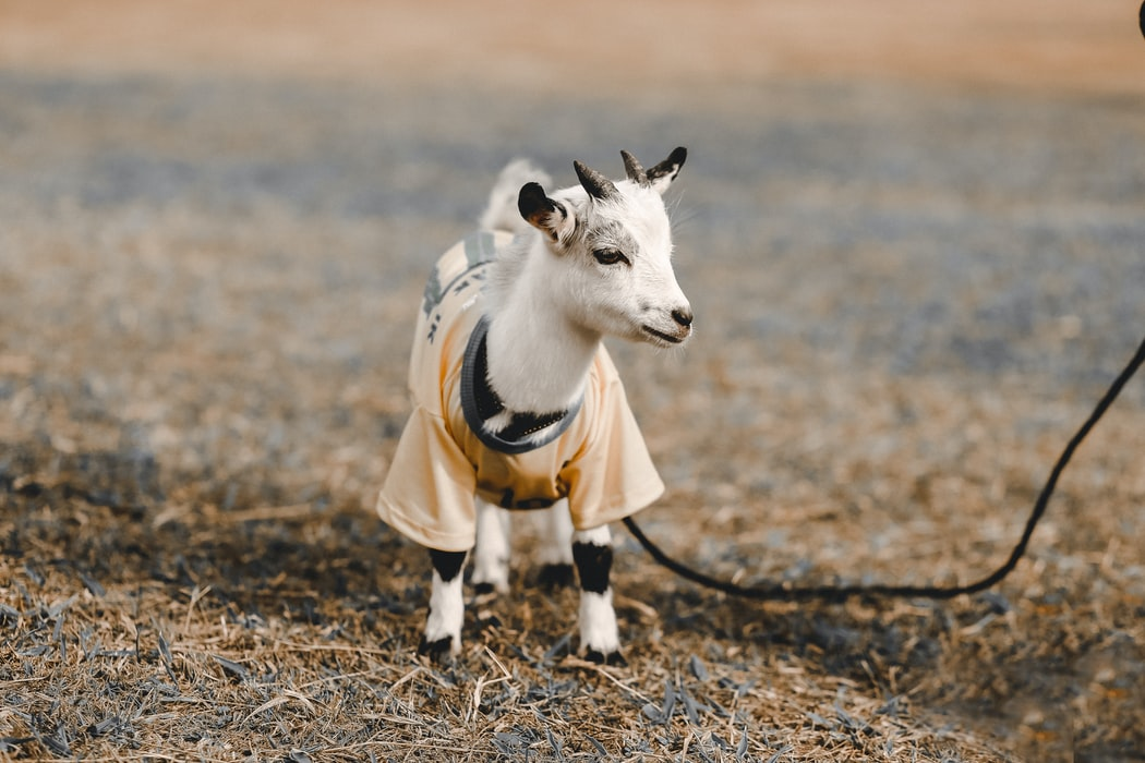 Did you know that goats are as friendly and loyal as dogs??? Learn more about that and other cool things on this roundup of recent research.