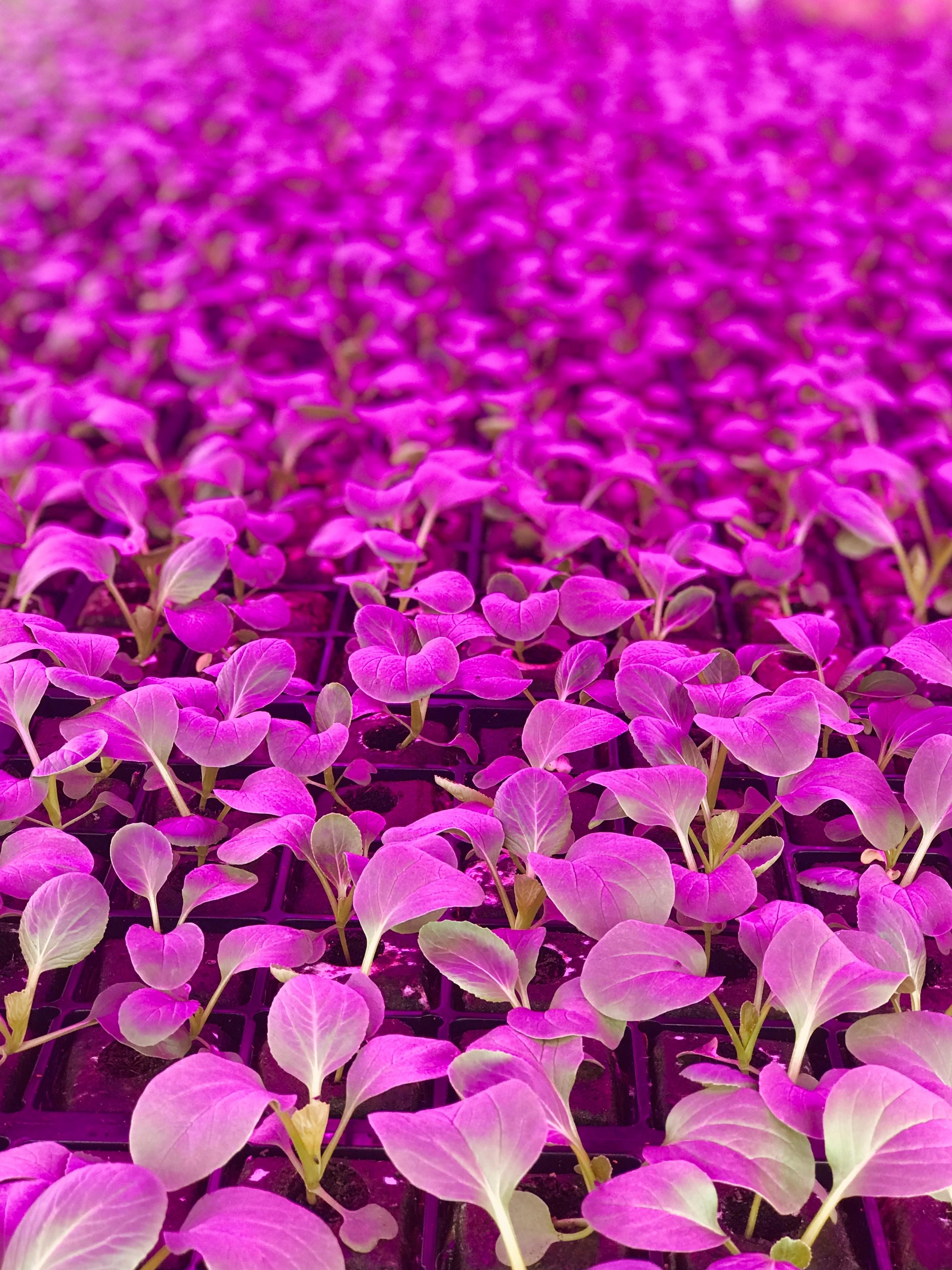 purple flowers in shallow focus shot