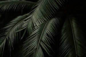1612. Növények világa