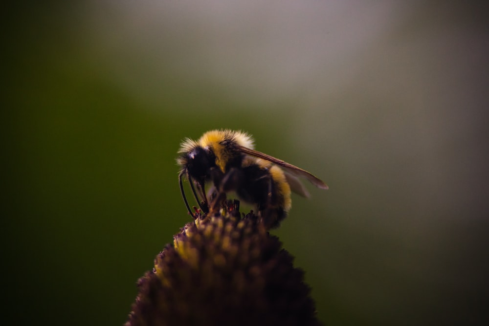 brown and yellow bee perched on flower