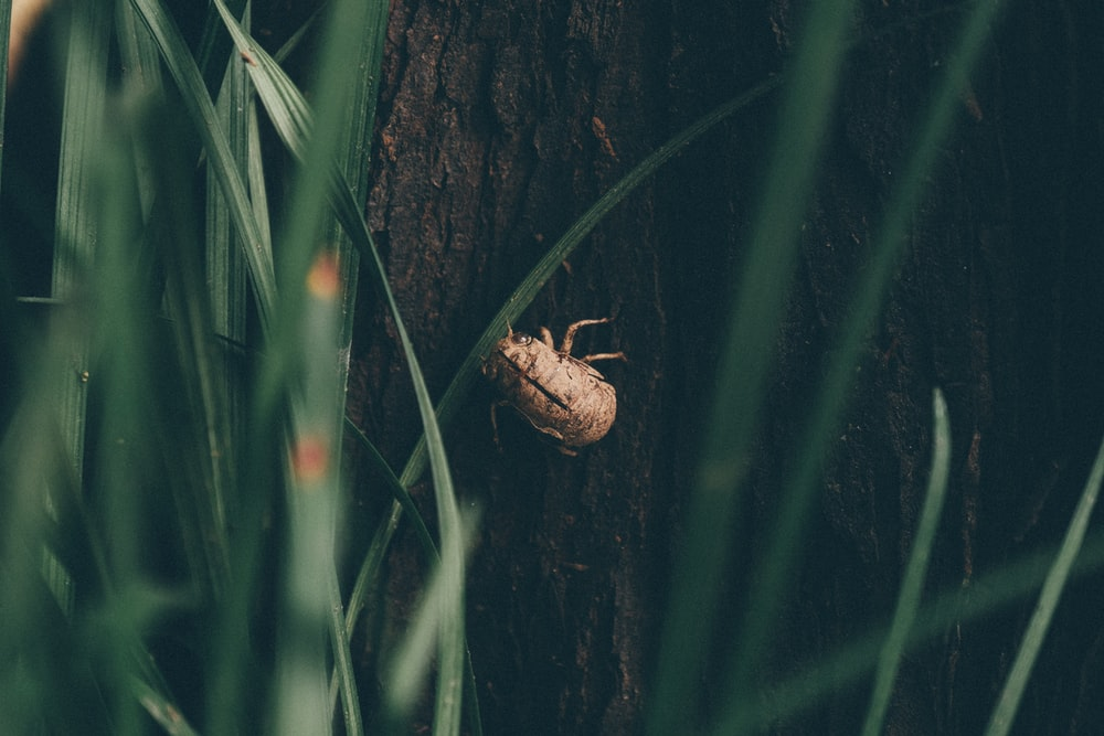 selective focus photography of june beetle