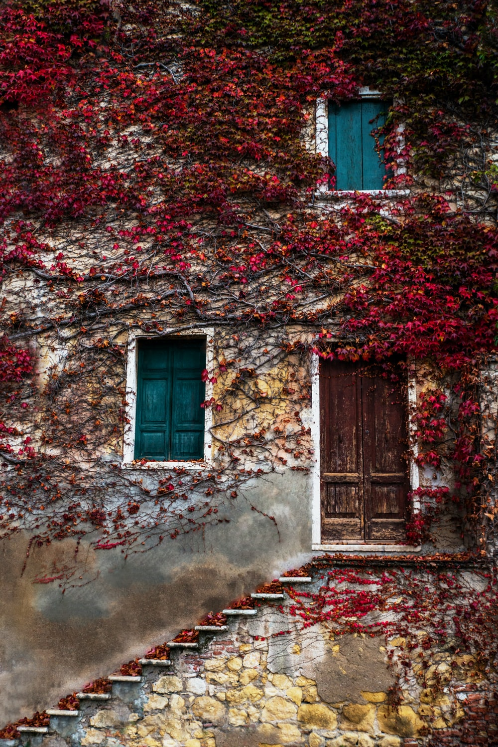 red leafed vine plant covered house