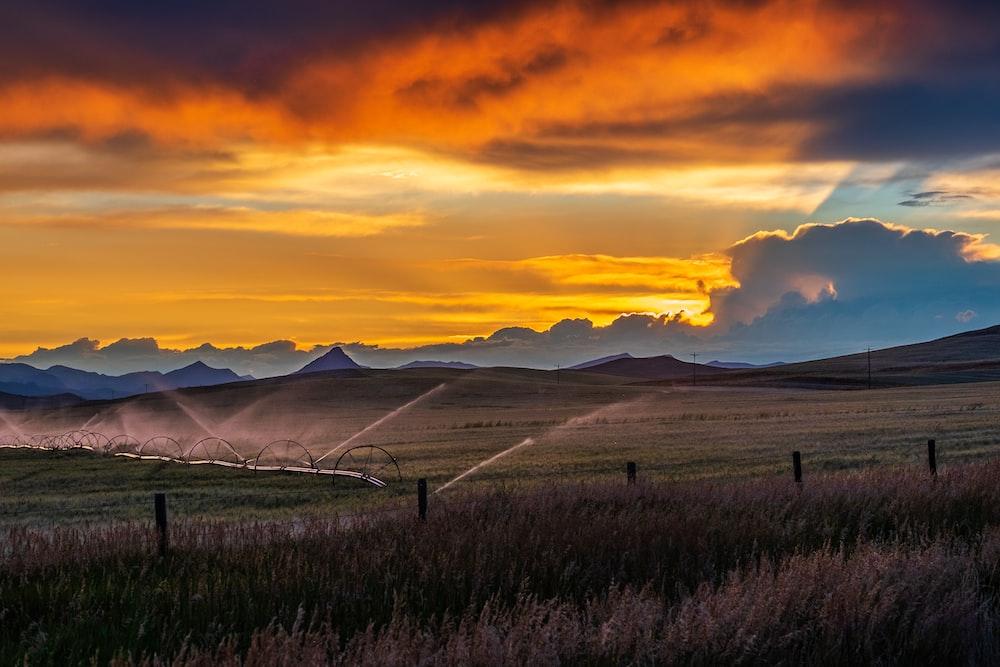 grass field during sunset