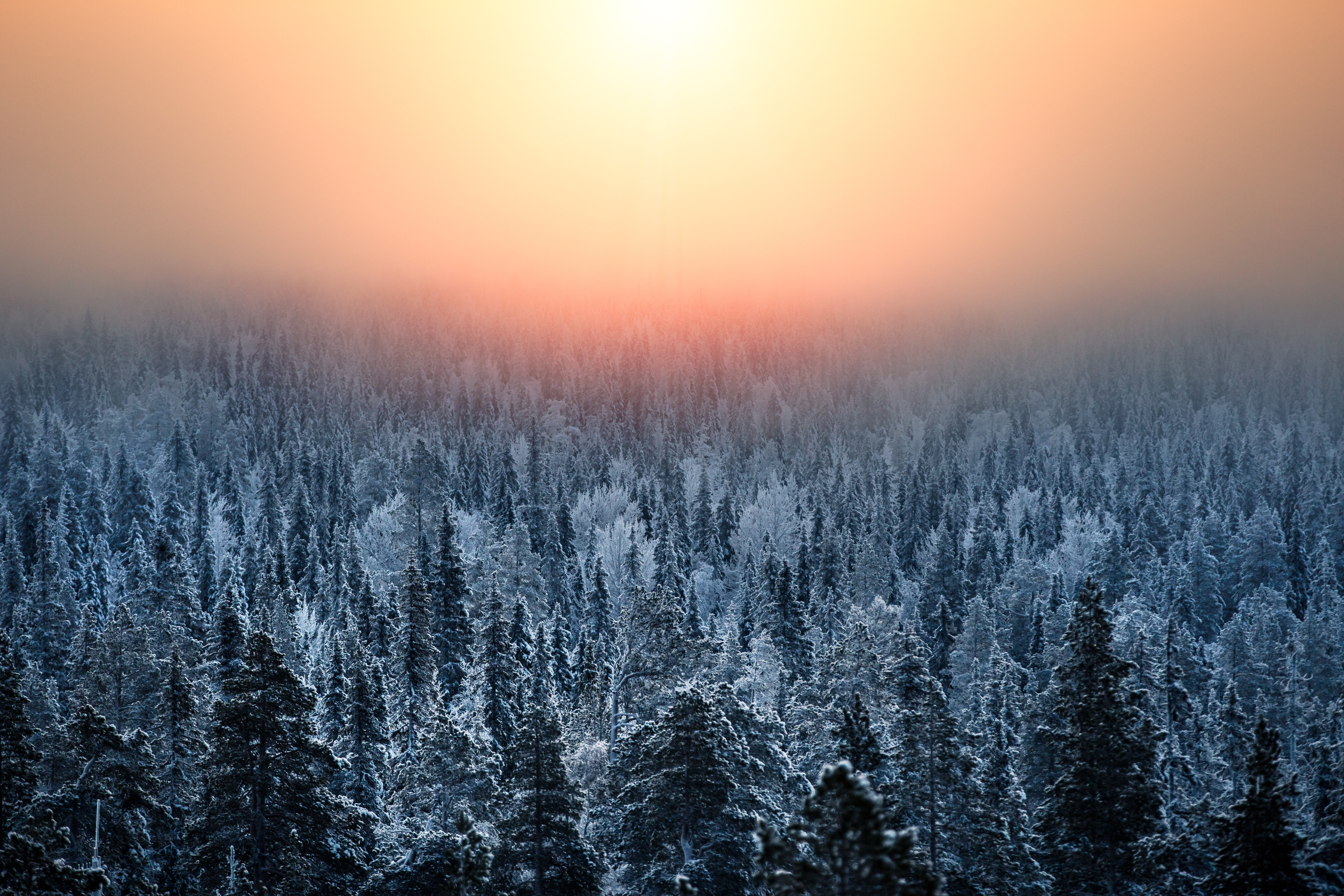 snow covered trees under the sun