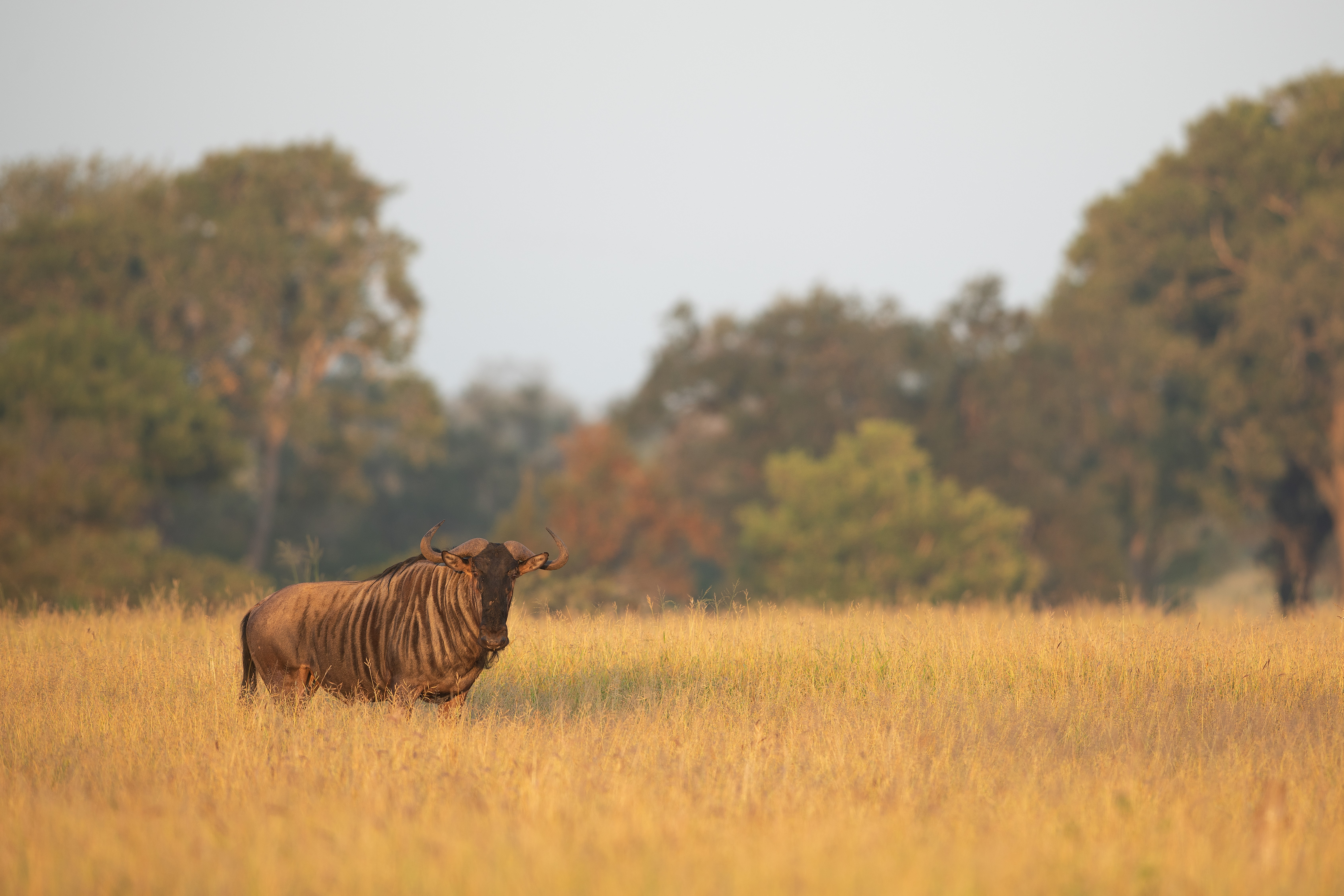 selective focus photography of animal on open field