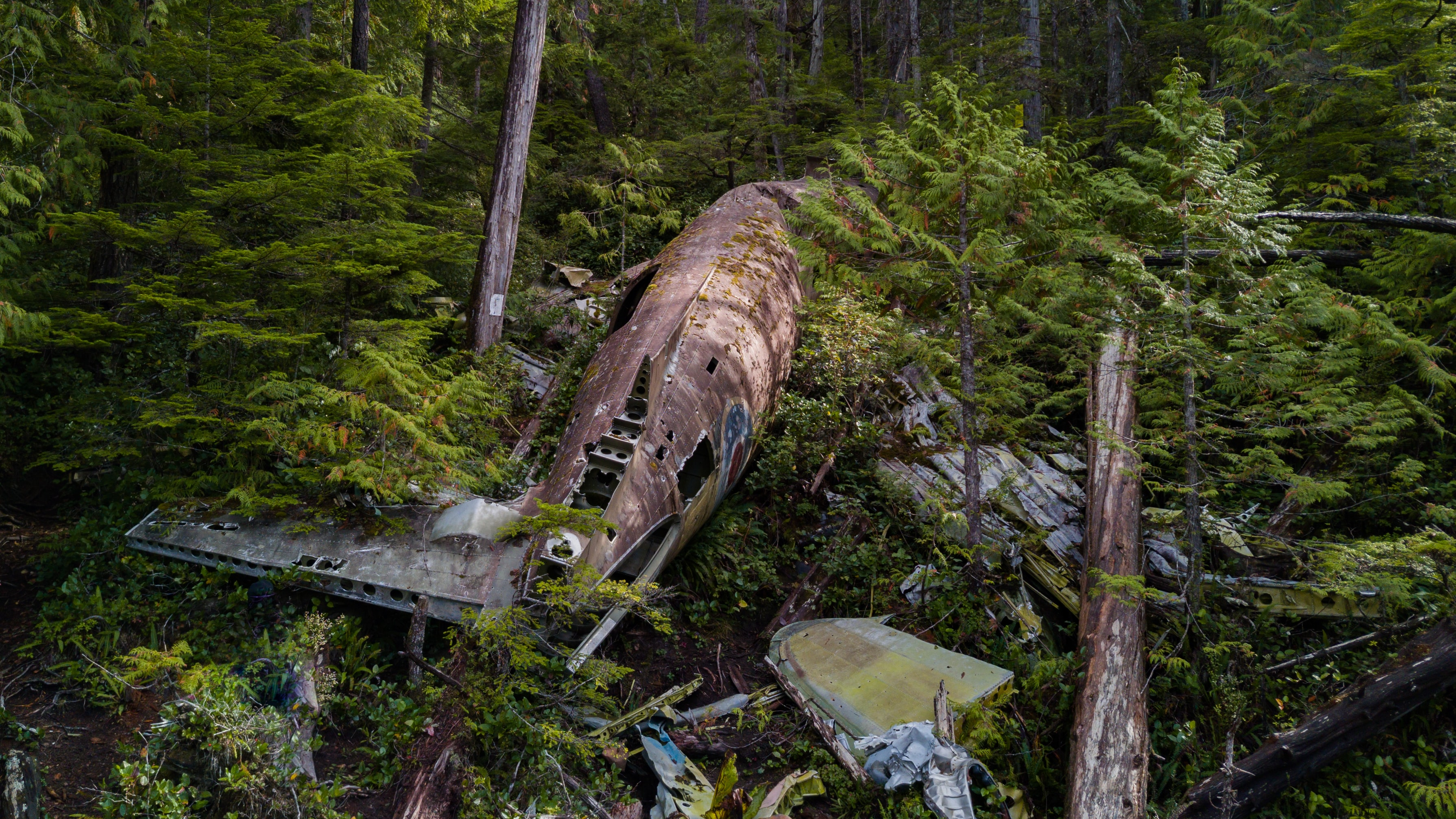 wrecked plane in forest during daytime