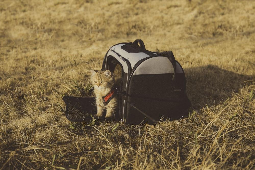 gray cat in pet carrier