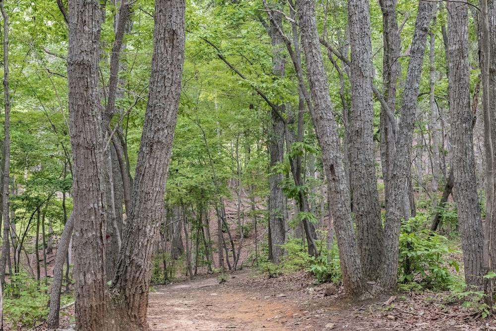 pathway between trees