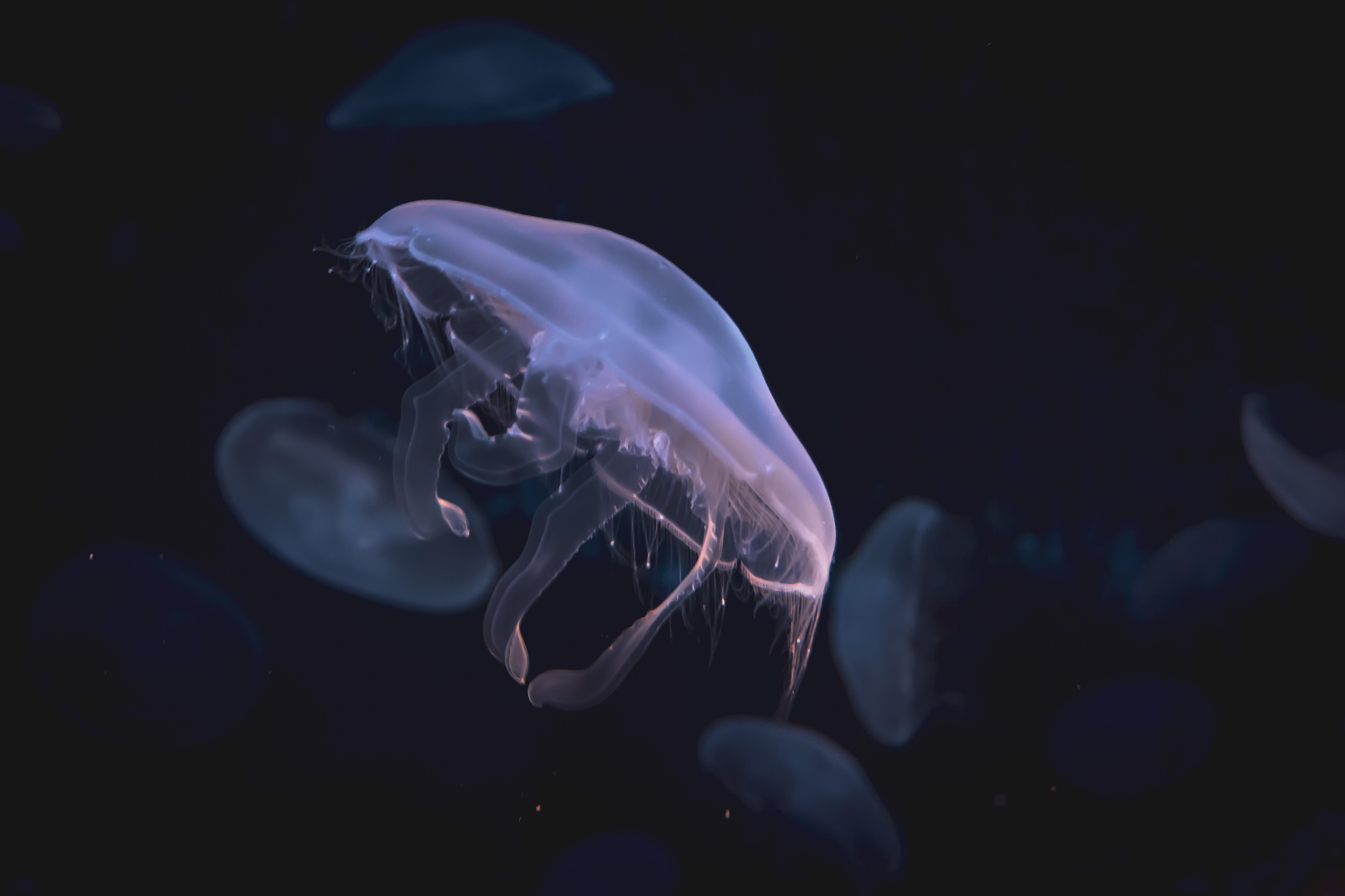 moon jellyfish digital wallpaper