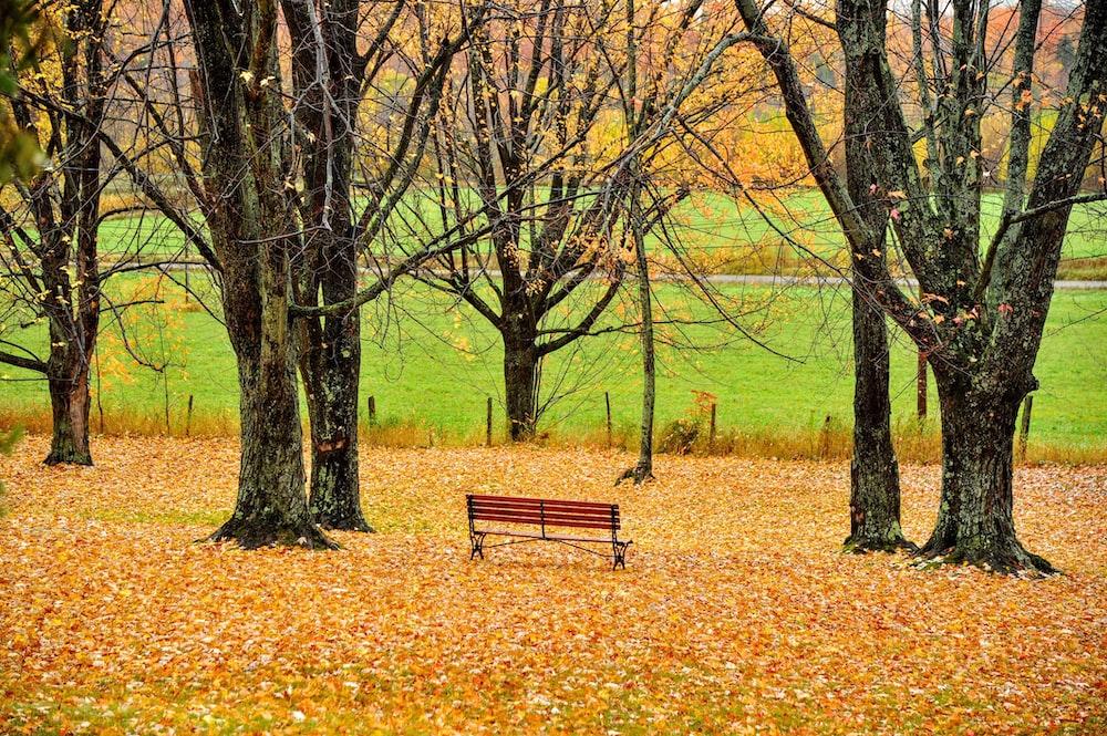 brown wooden bench between trees