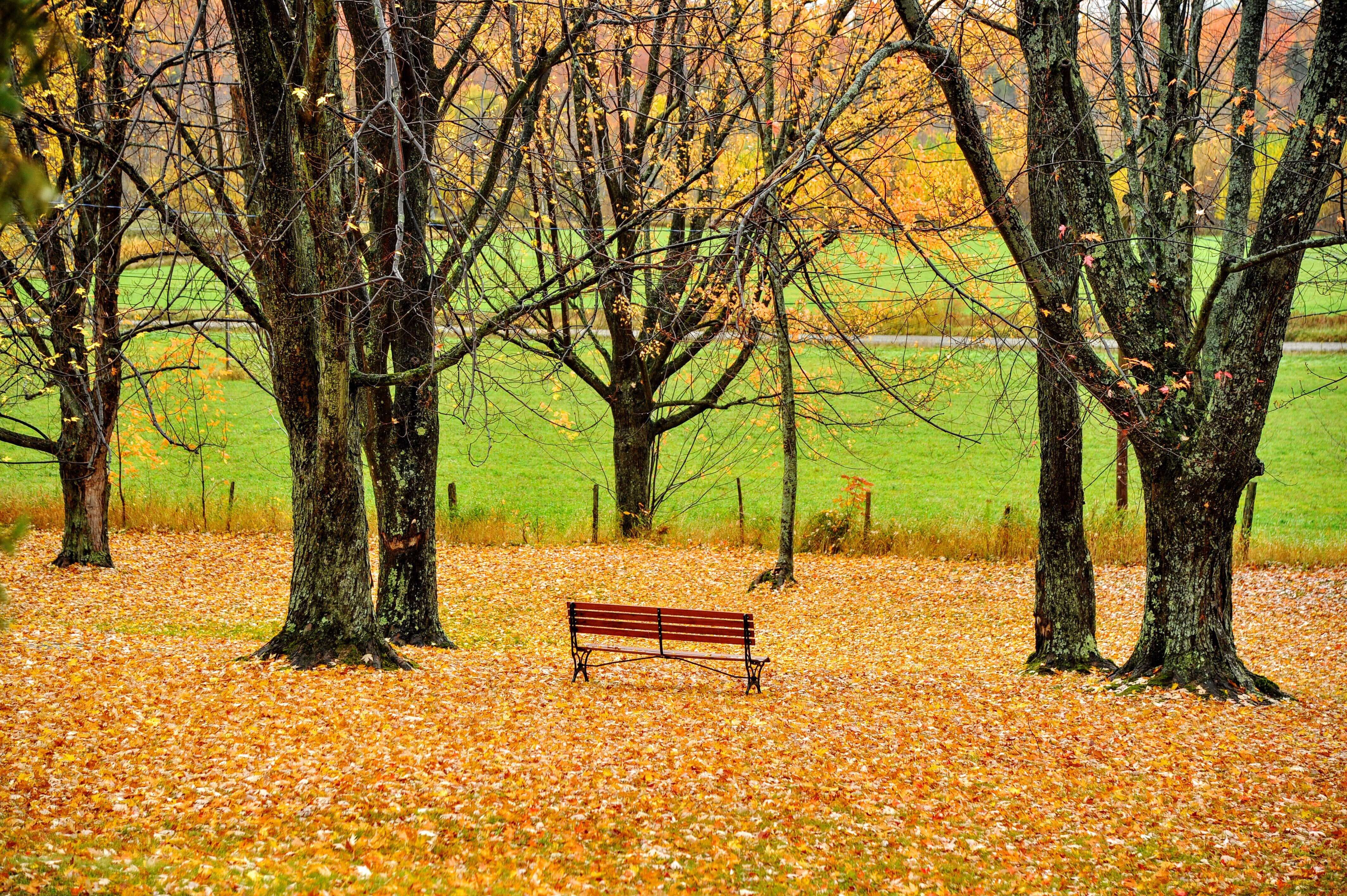 brown wooden bench between trees