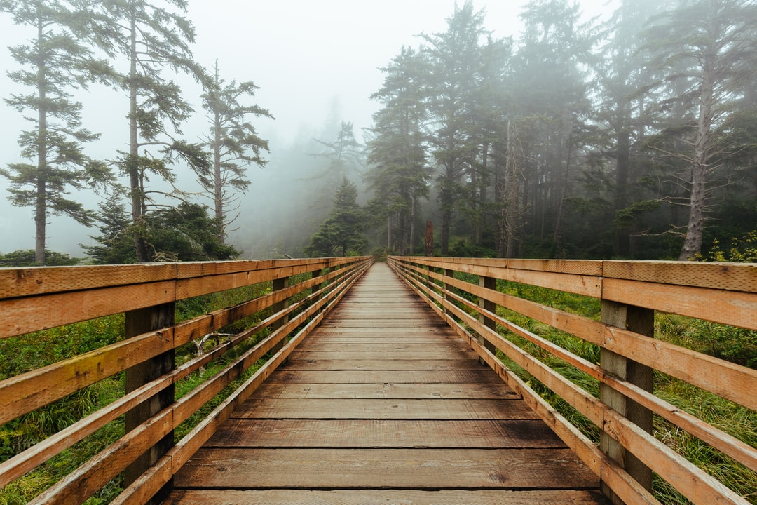 All I really need is a foggy forest in the morning to set my day off to a positive start.