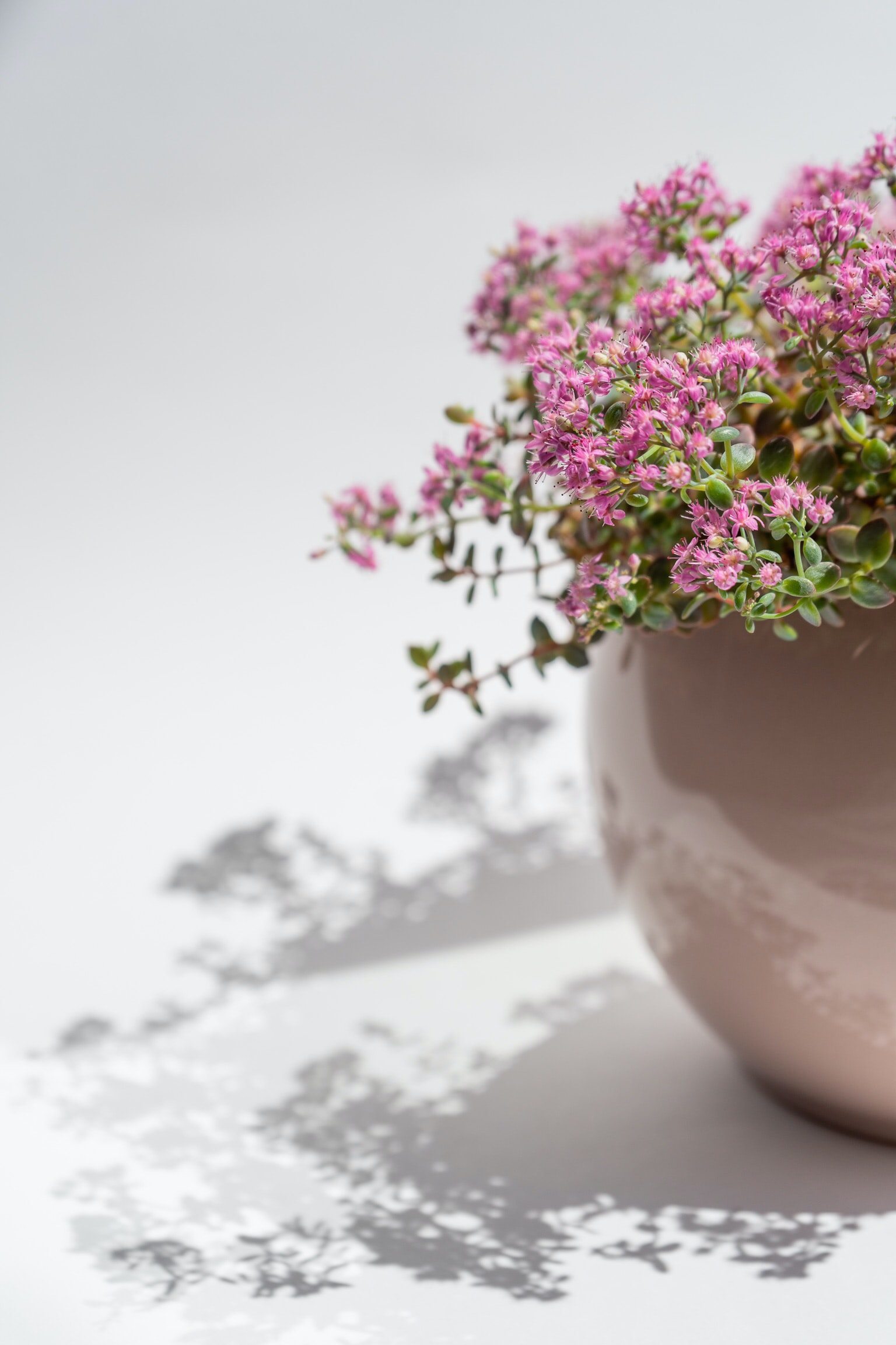 pink flowers in gray ceramic vase