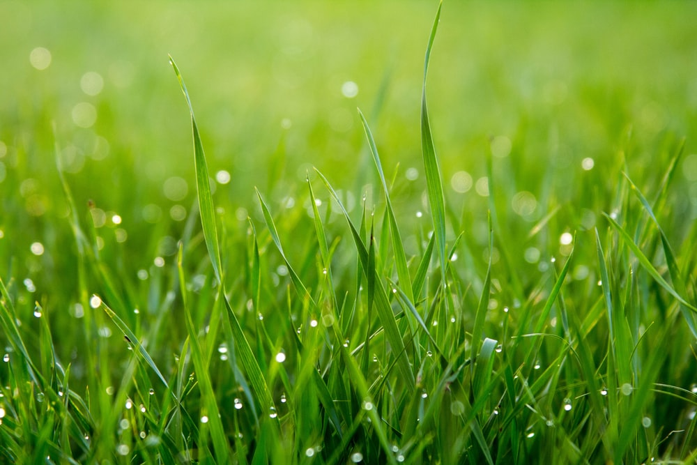 close photo of green grass