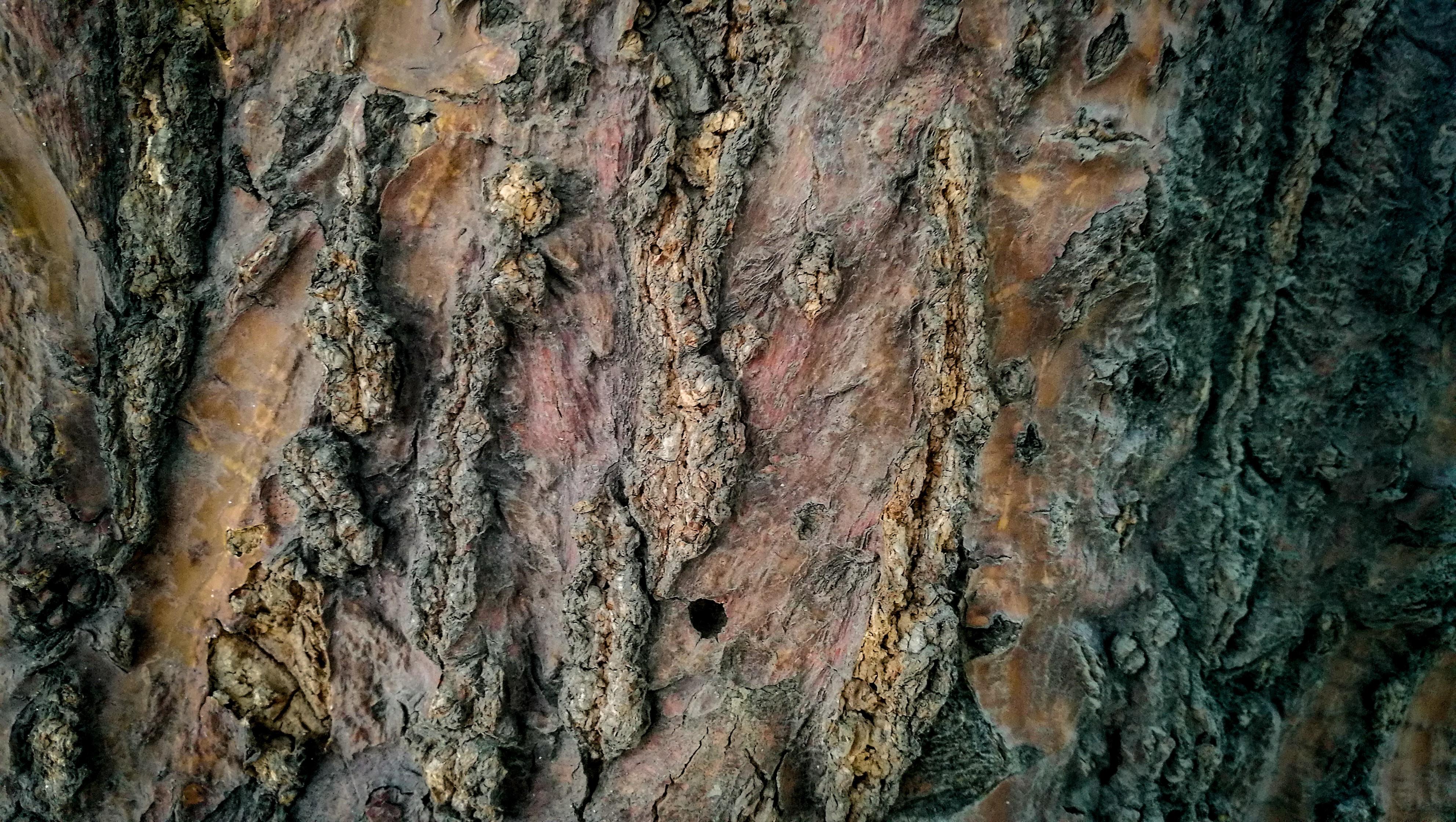 wooden tree log