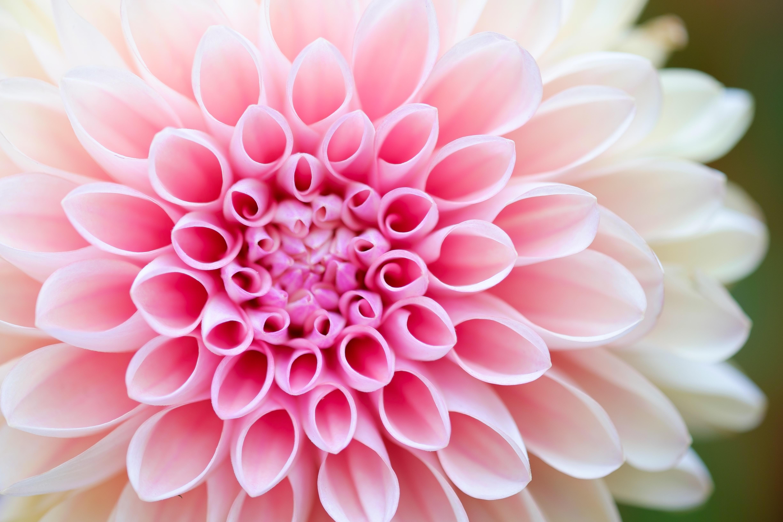 Download Flower Wallpapers HD